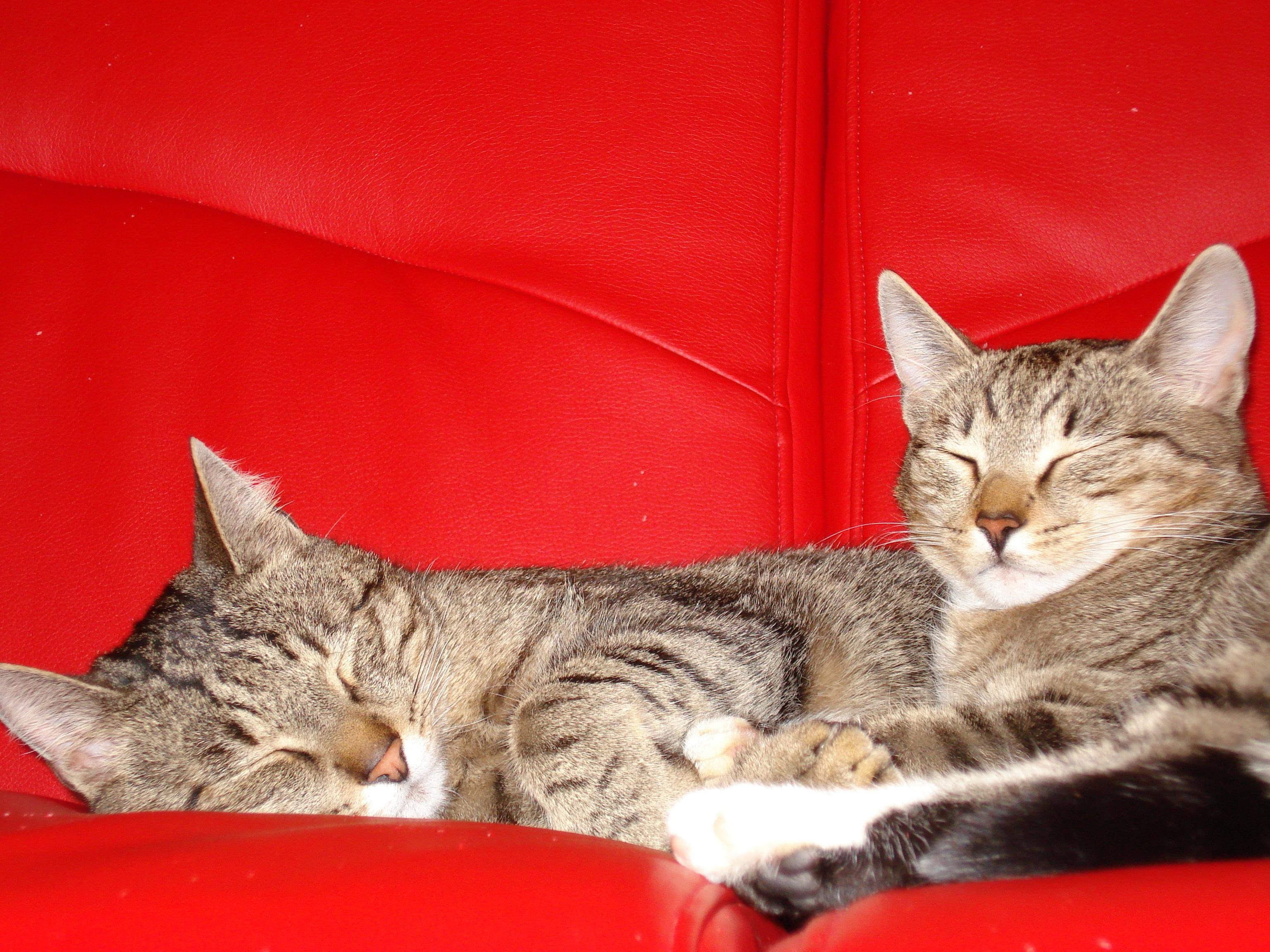 Все кошки все коты и все котята скачать