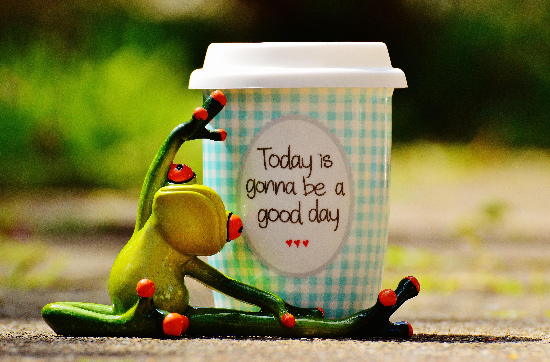 Kostenlose Foto Kaffee Vogel Süß Niedlich Tasse Grün Farbe