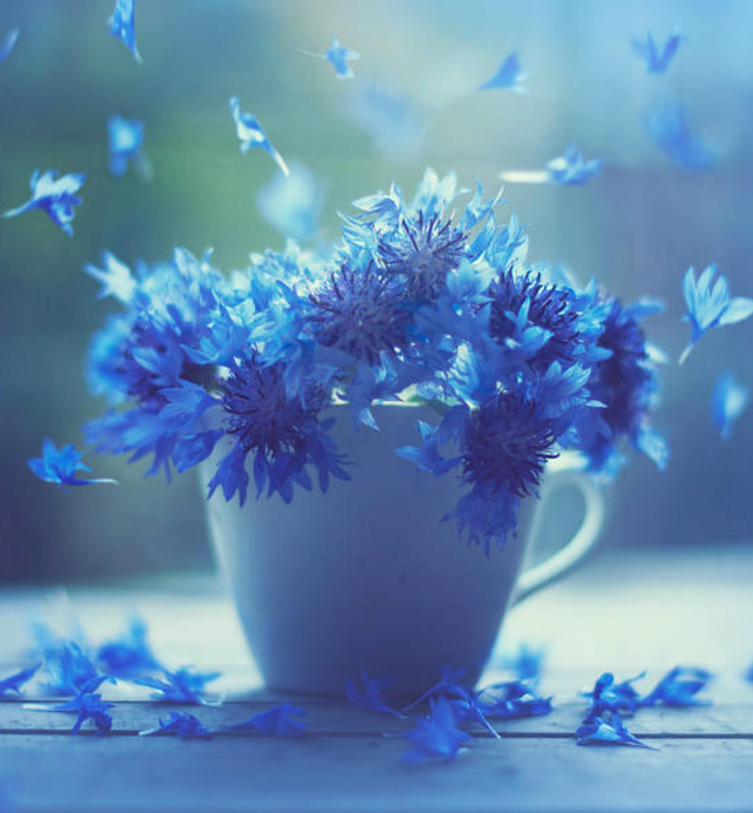 Gambar Cangkir Kopi Bunga Mekar Musim Semi Lembut Jatuh