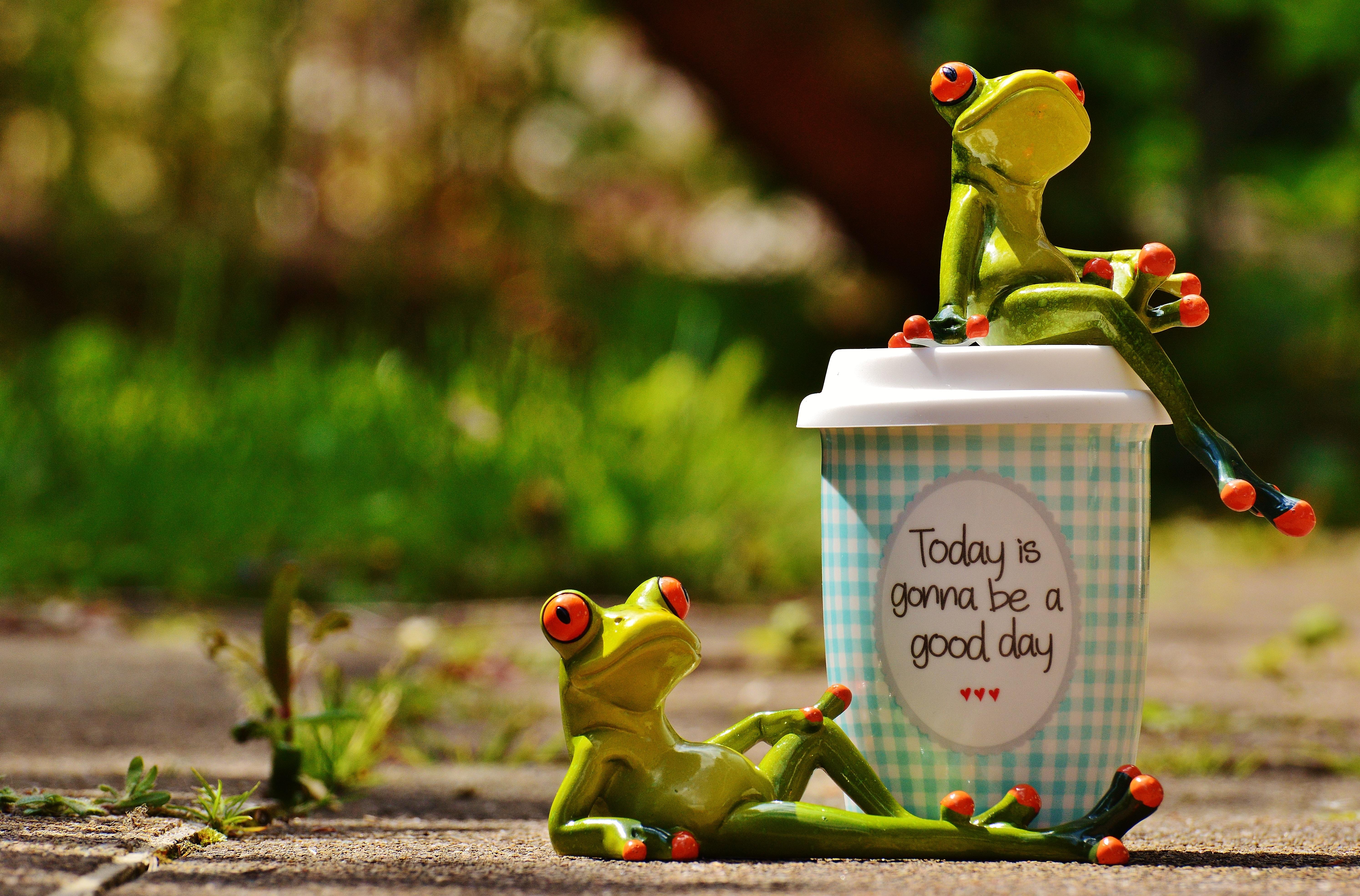 жизнь, лягушка в кофе картинки истринского р-н улицами