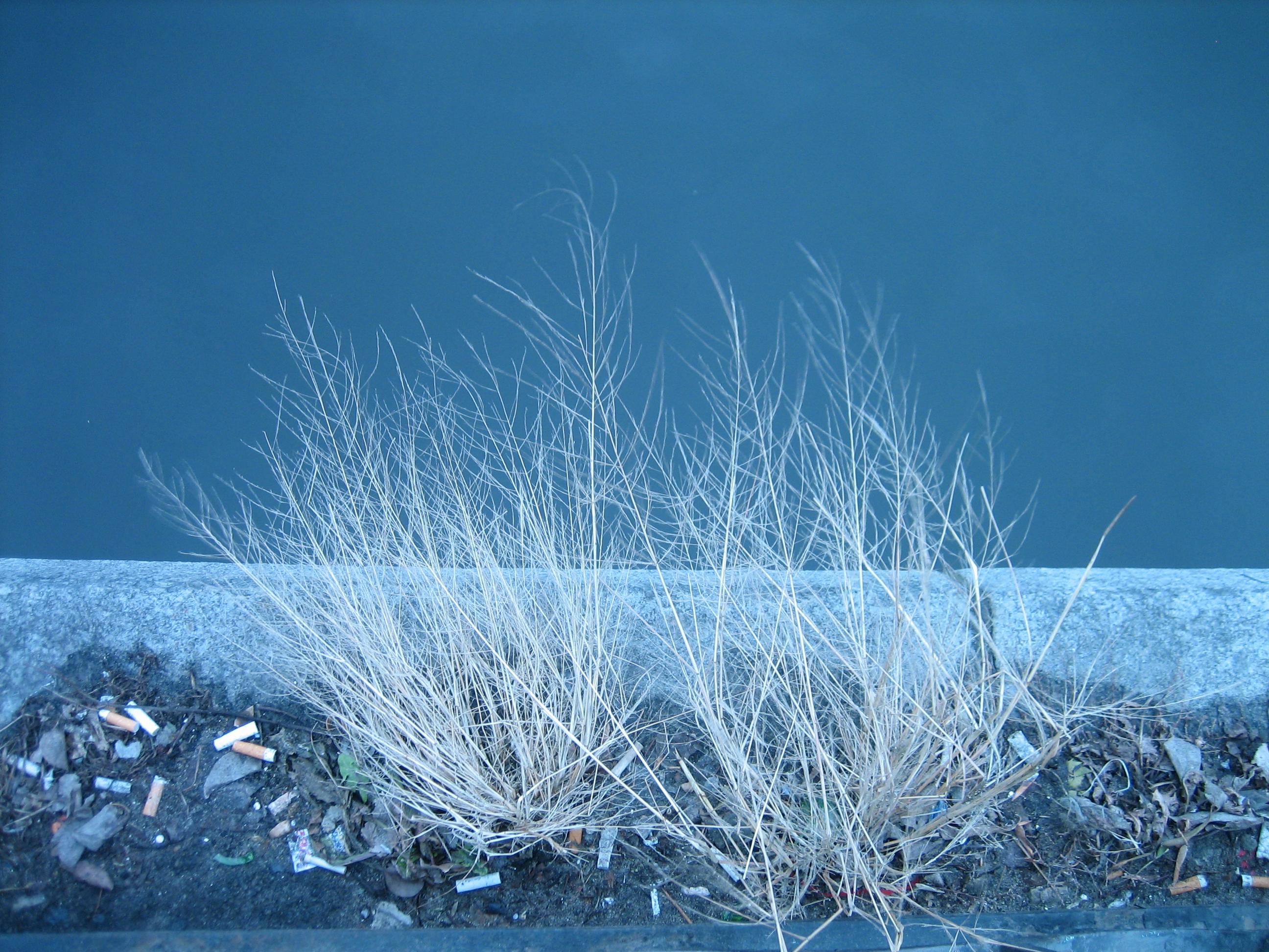 無料画像 コールド タバコ 自然 乾燥植物 フローズン 冬 憂鬱 ノスタルジックな 悲しい インスピレーション 芸術的 空 凍結 水 雪 霜 地球の雰囲気 氷 ブランチ 木 コンピュータの壁紙 草家 地平線 2592x1944 Lesia Pko