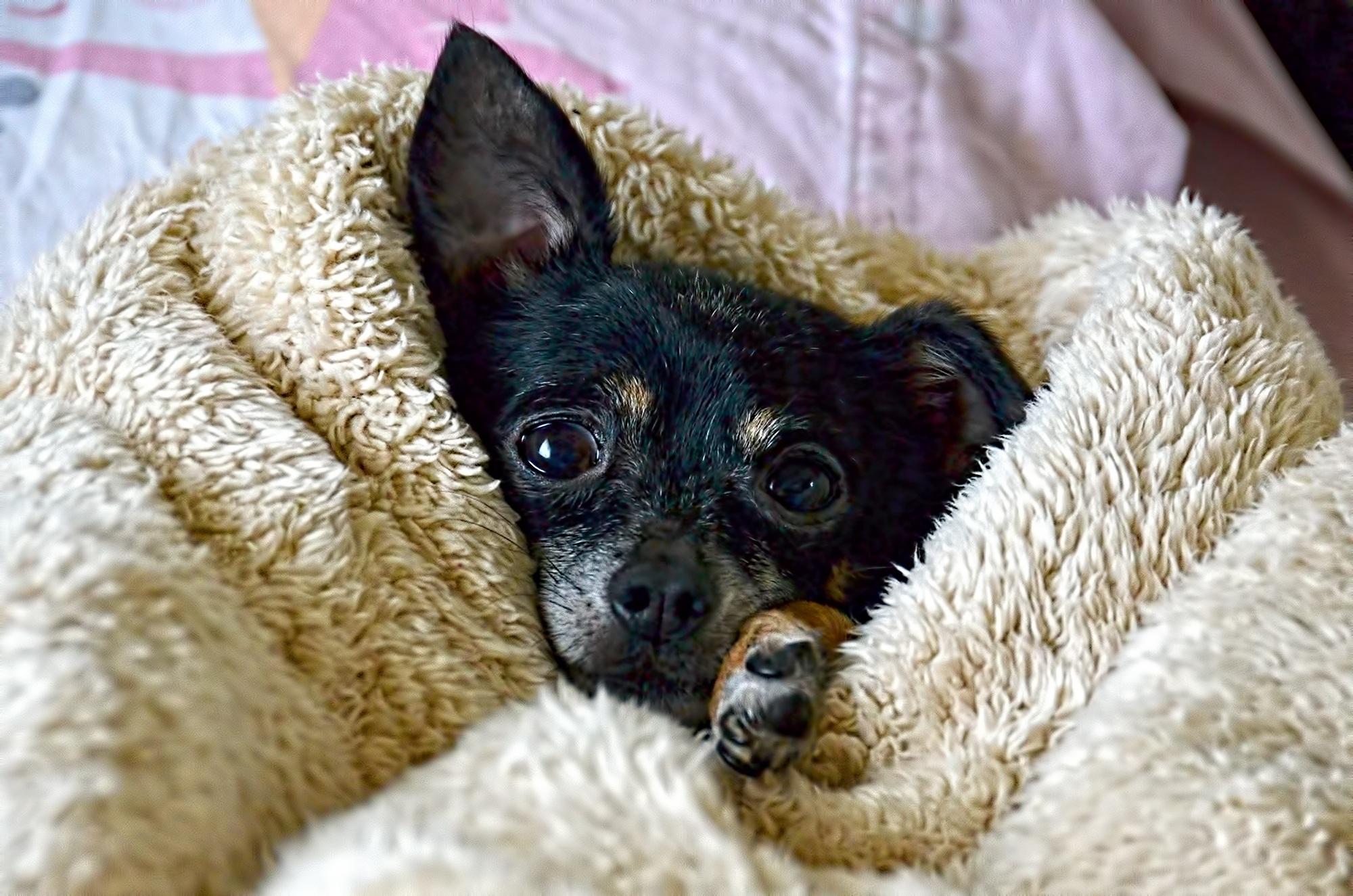 Kostenlose Foto Kalt Welpe Tier Niedlich Liebe Haustier