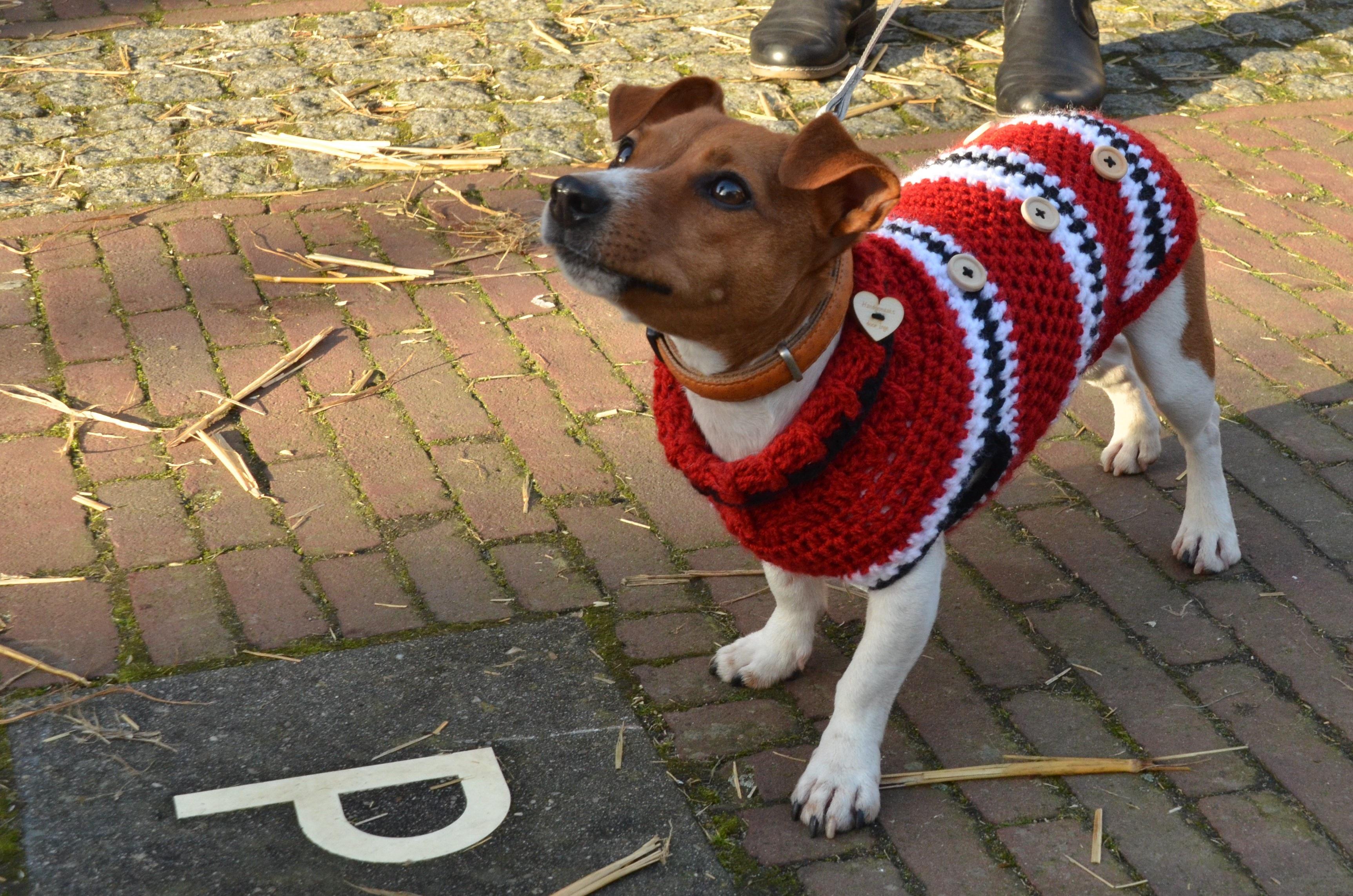 Immagini Belle Freddo Inverno Animale Domestico Giacca