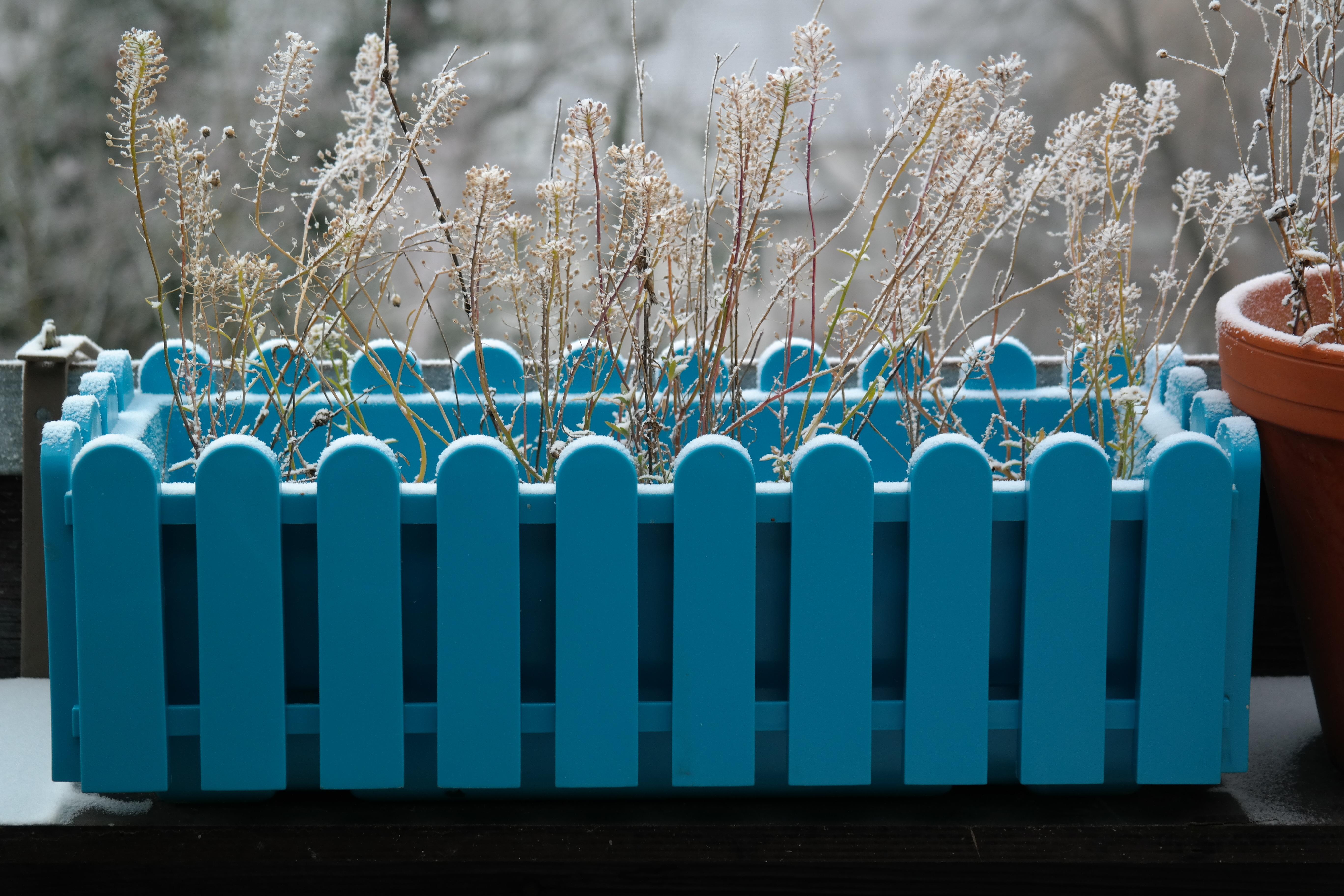Fotos gratis : frío, invierno, escarcha, color, congelado, azul ...