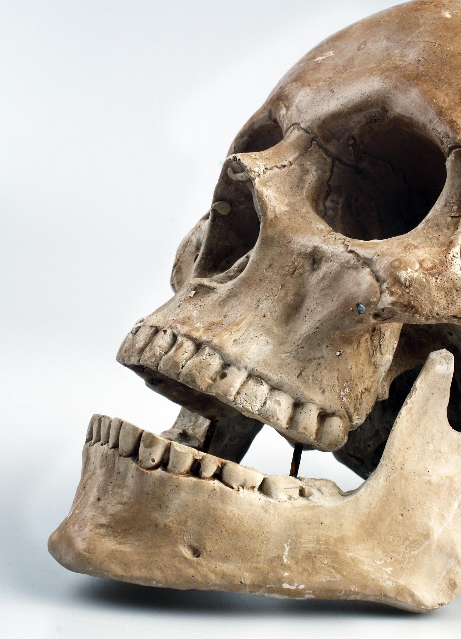 Kostenlose foto : Farbe, Kleidung, Schädel, Knochen, Skulptur, Kopf ...