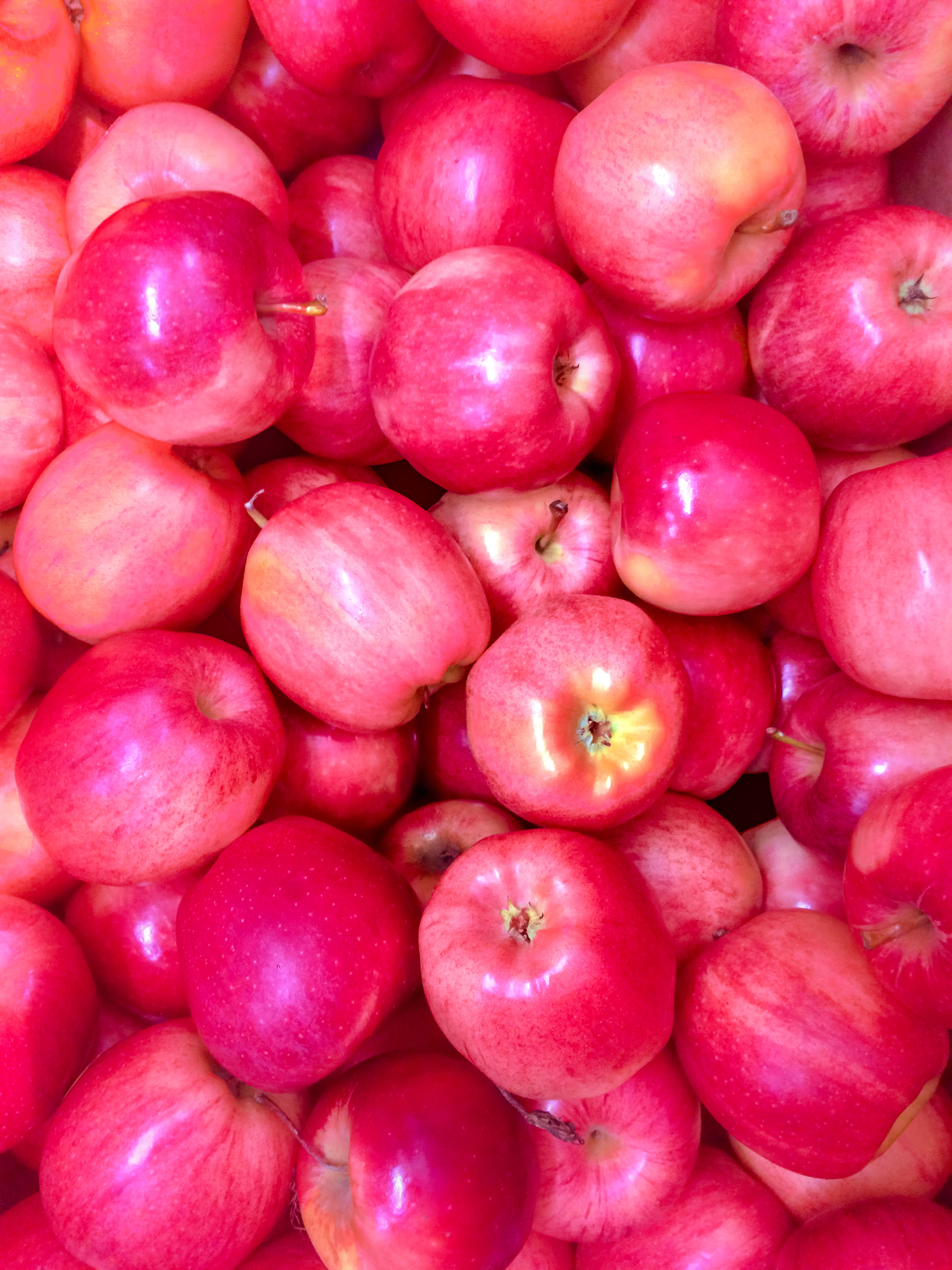 hình ảnh : thơm ngon, chế độ ăn, Hoa quả tươi, Sự tươi mát, trái cây, khỏe mạnh, Điểm nổi bật, Ngọt ngào, thiên nhiên, Dinh dưỡng, Sản xuất, Đỏ, táo đỏ, ...