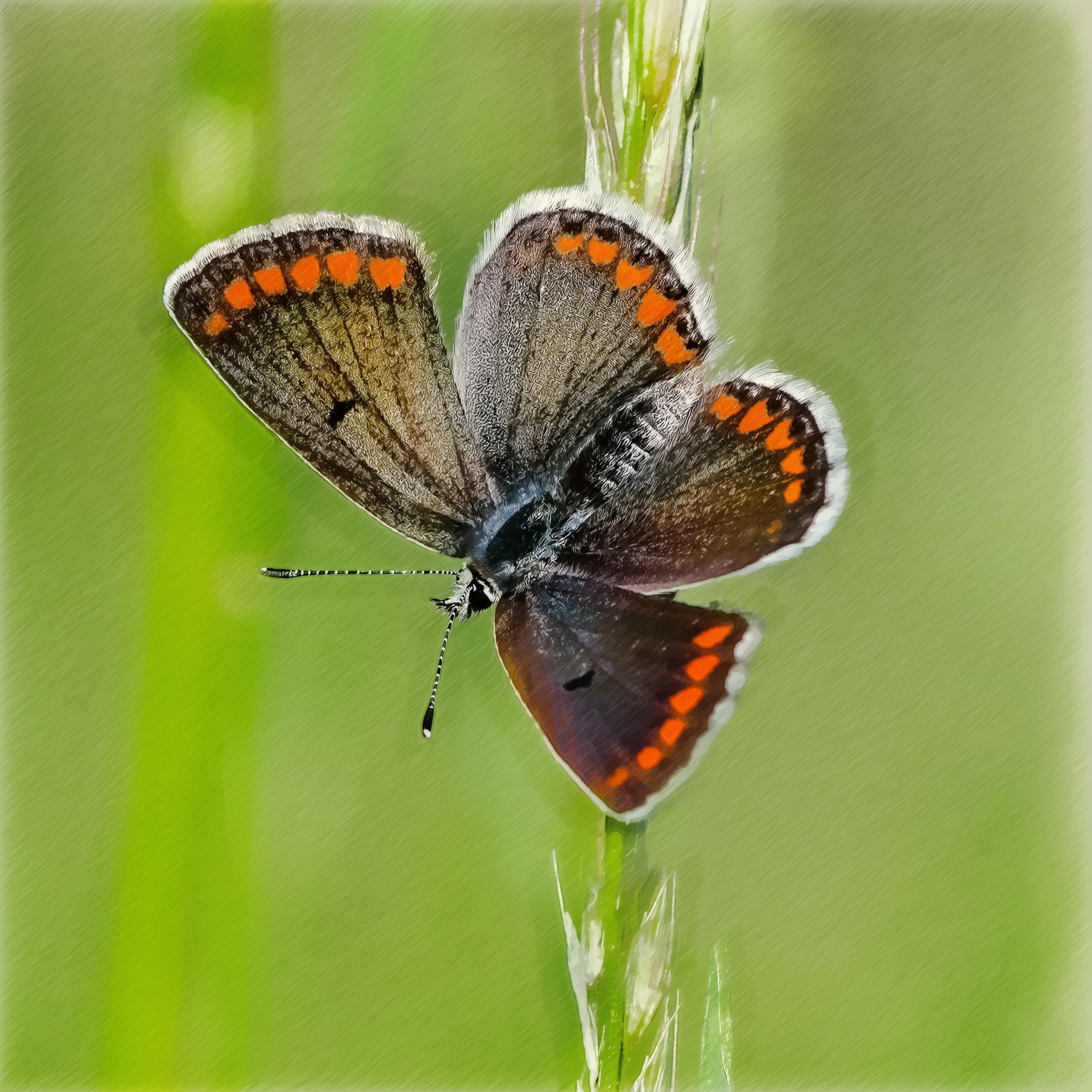 Fotos Gratis Insecto Pintar Polilla Invertebrado Art Dibujo