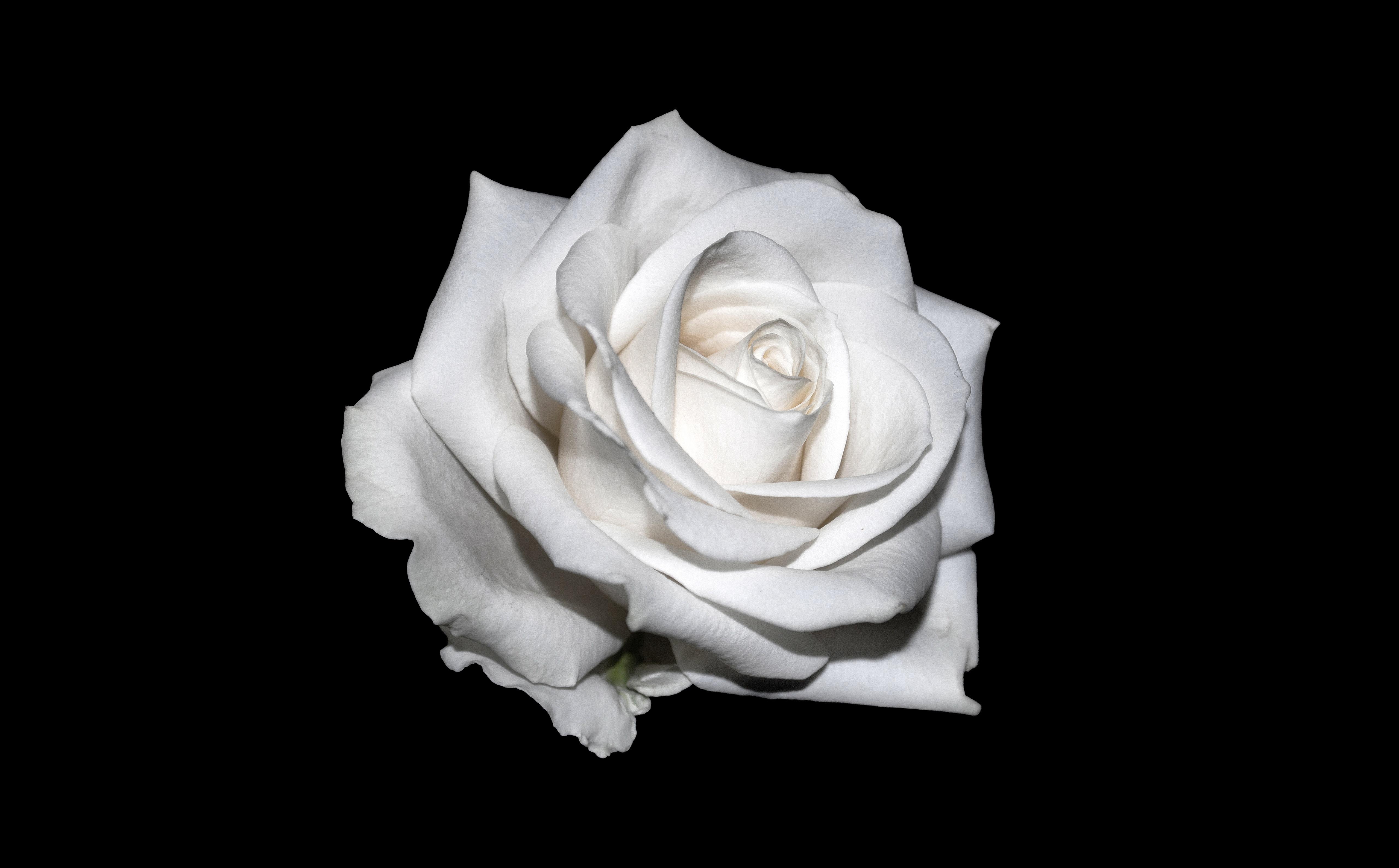 Gambar Kreatif Hitam Dan Putih Menanam Daun Bunga Satu Warna