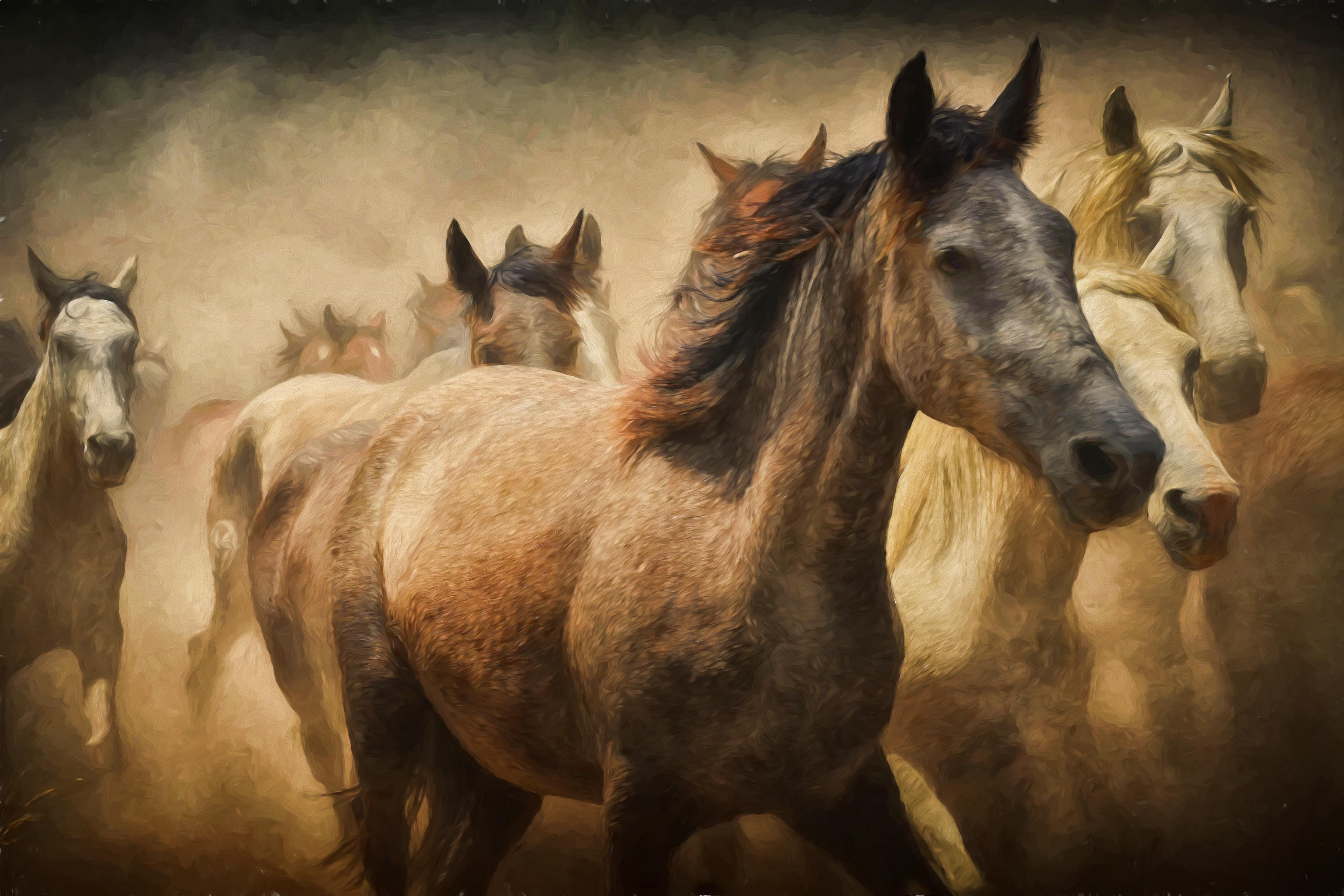 free images creative stallion mane still life artwork horses vertebrate mare digital. Black Bedroom Furniture Sets. Home Design Ideas