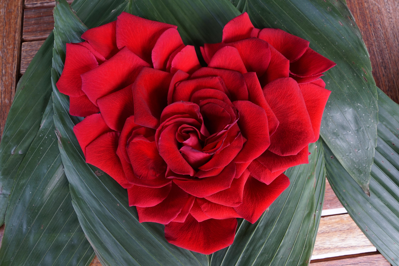 Images gratuites cr atif fleur p tale amour c ur - Bouquet de fleur en coeur ...