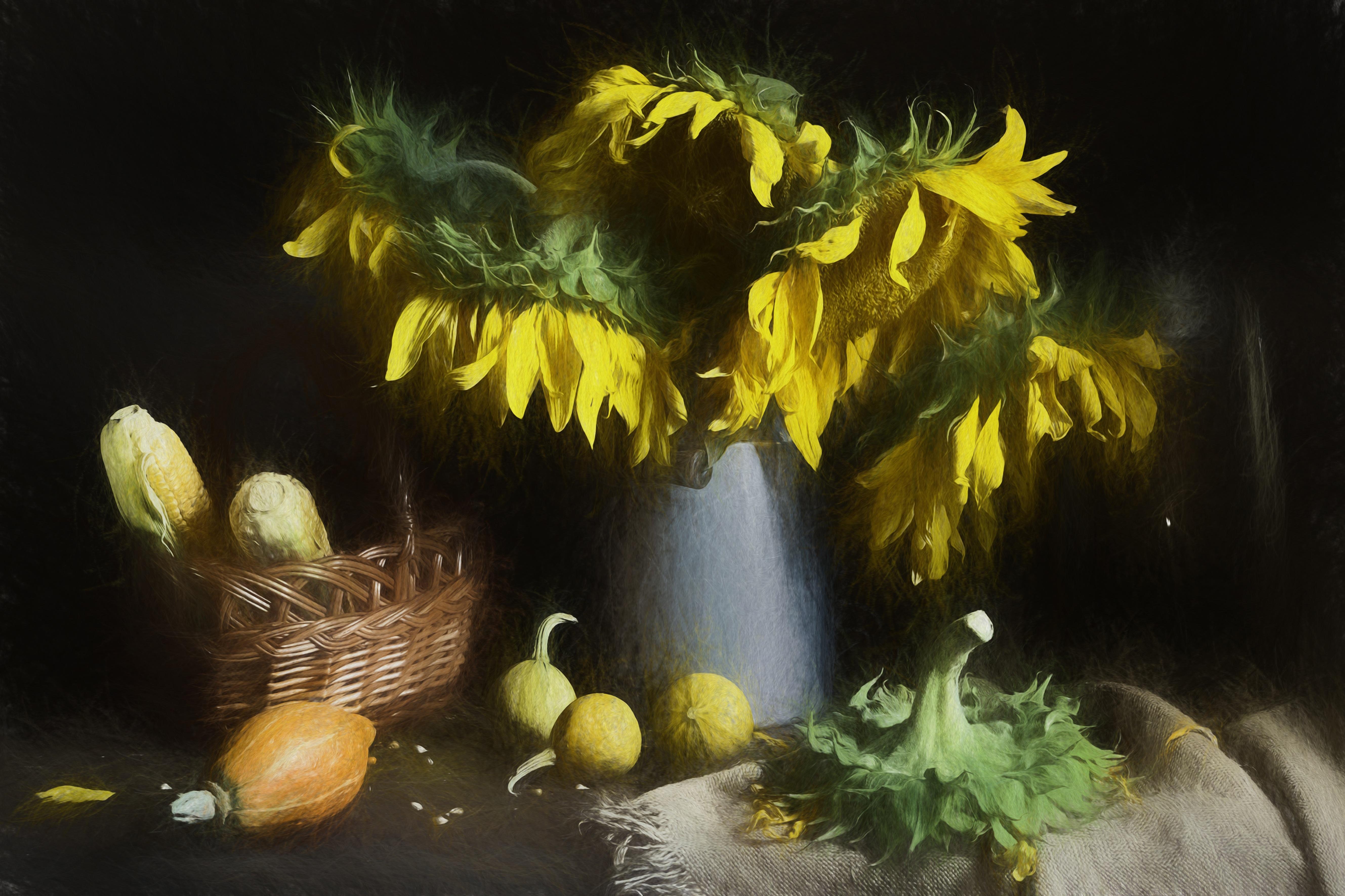 Fotoğraf Yaratıcı Güneş ışığı çiçek Sarı Sepet Bitki örtüsü
