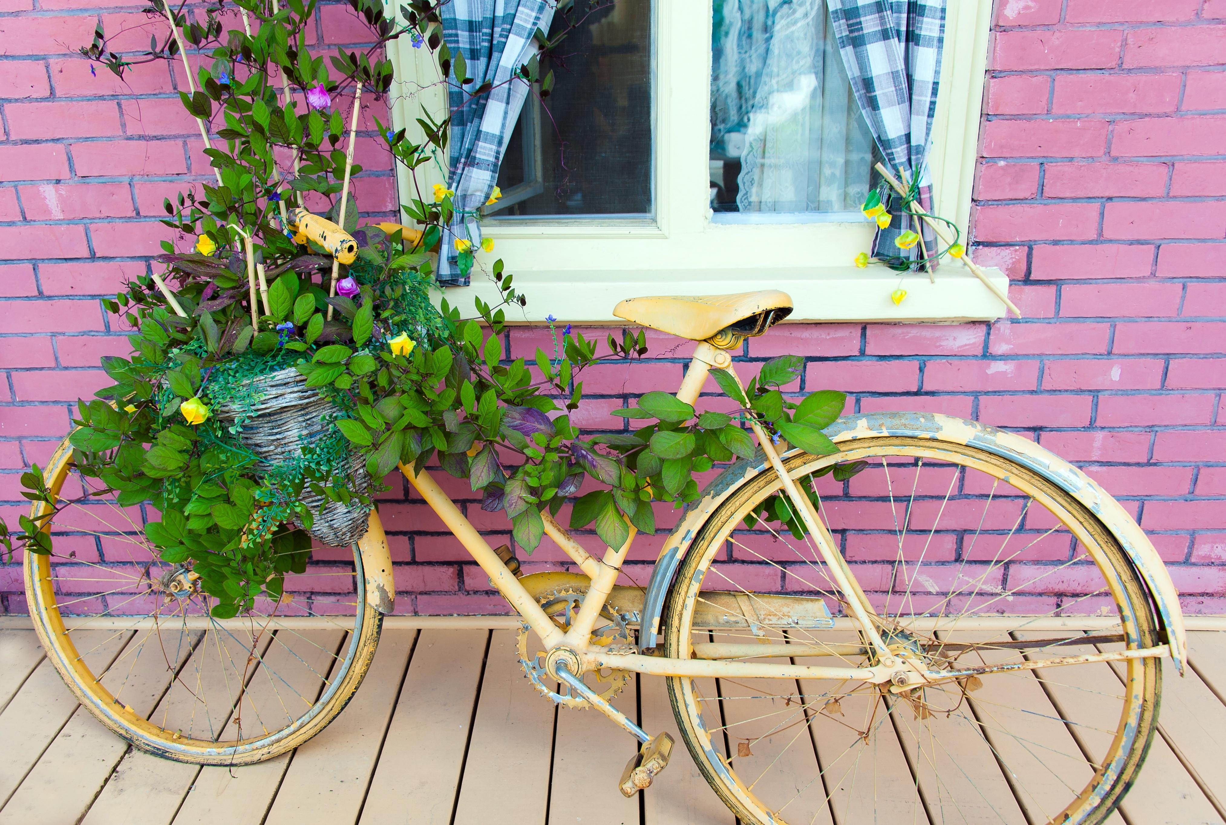 Kostenlose foto : kreativ, Jahrgang, Rad, Retro, Blume, Fenster ...