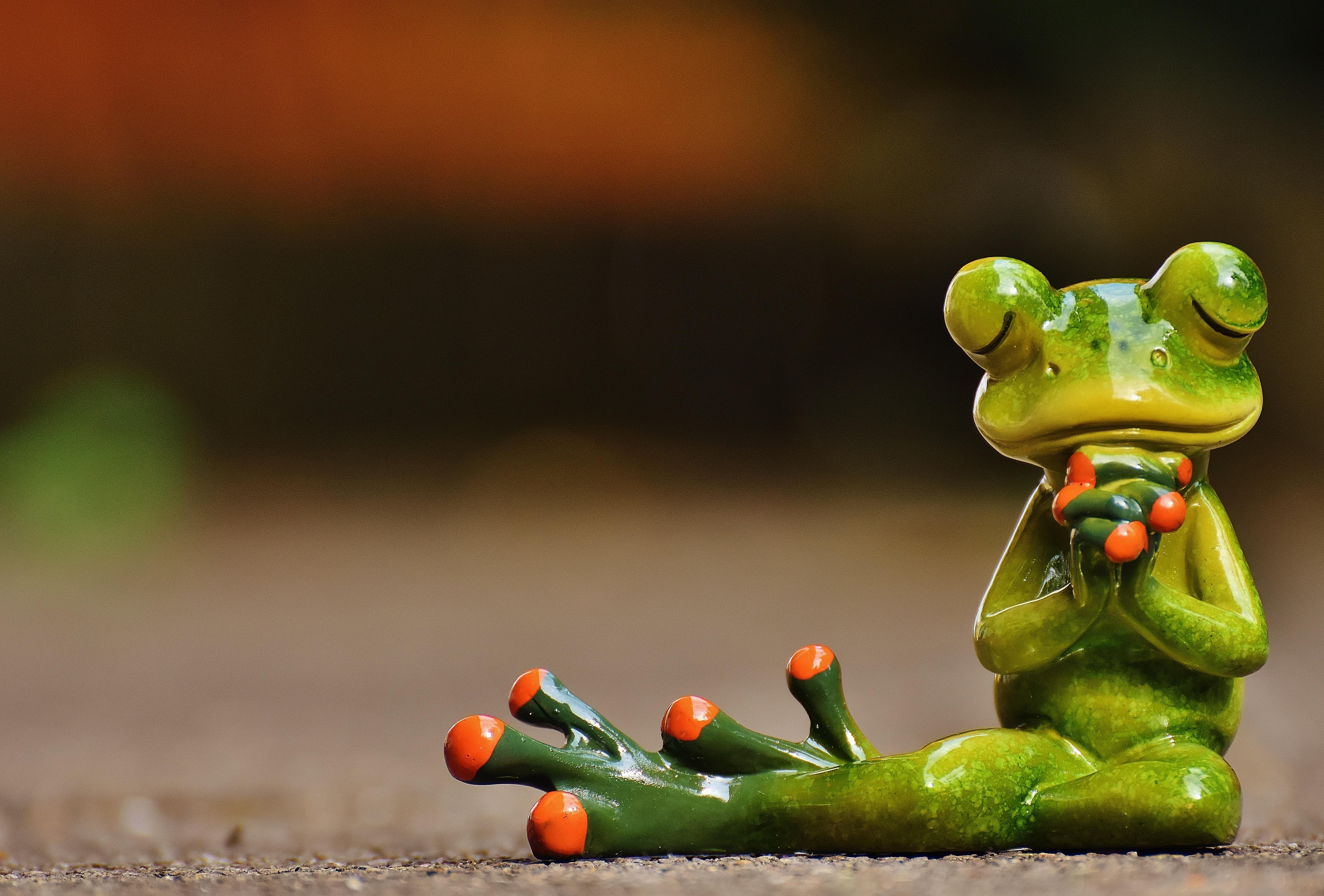 Картинки забавные лягушки