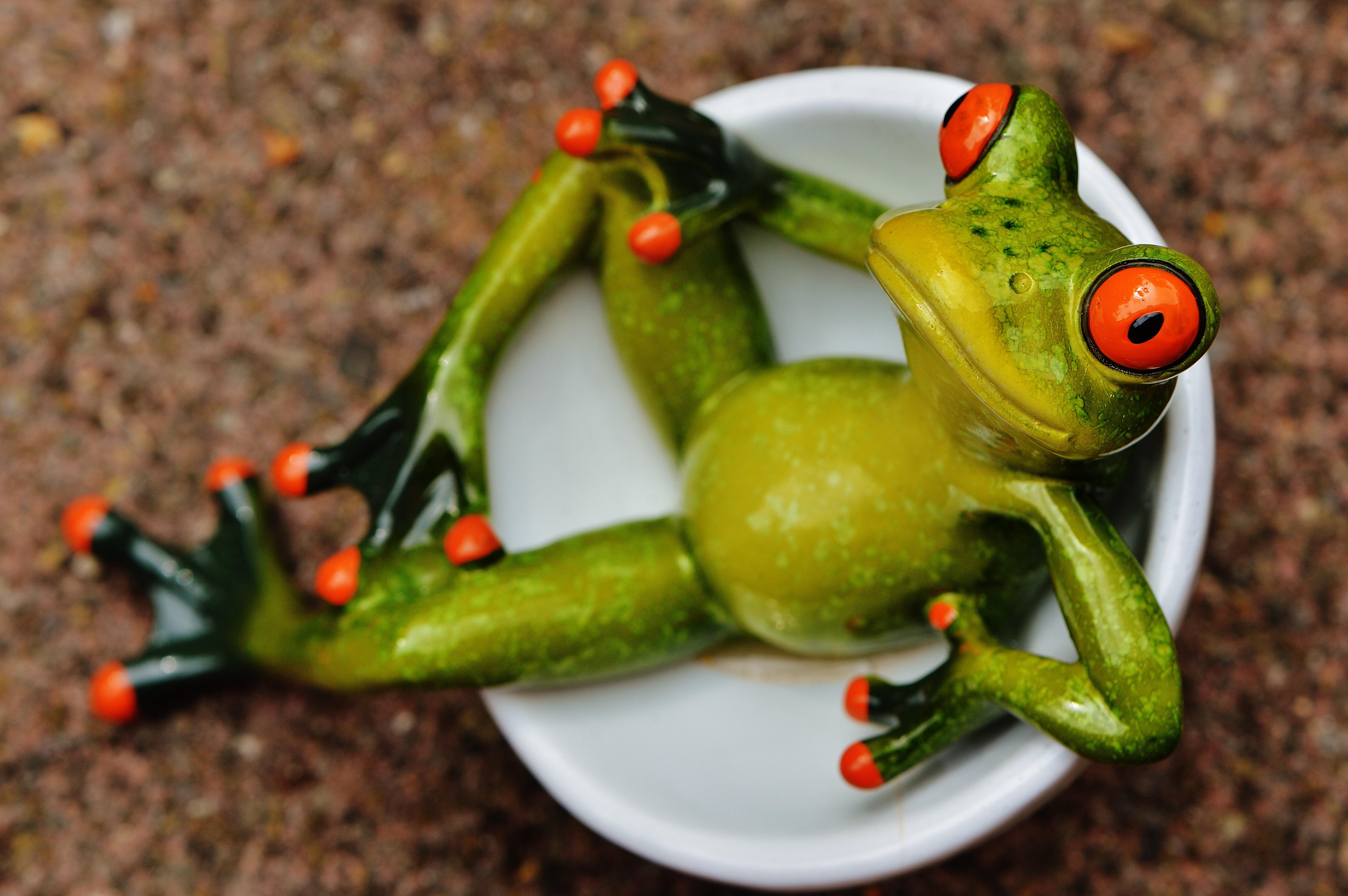 Картинка с лягушками прикольные