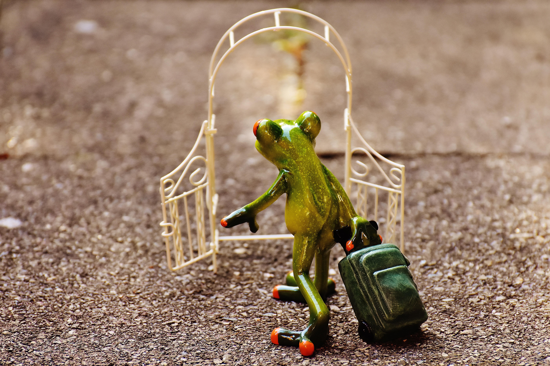 Free Cute Green Frog Reptile Amphibian Fig