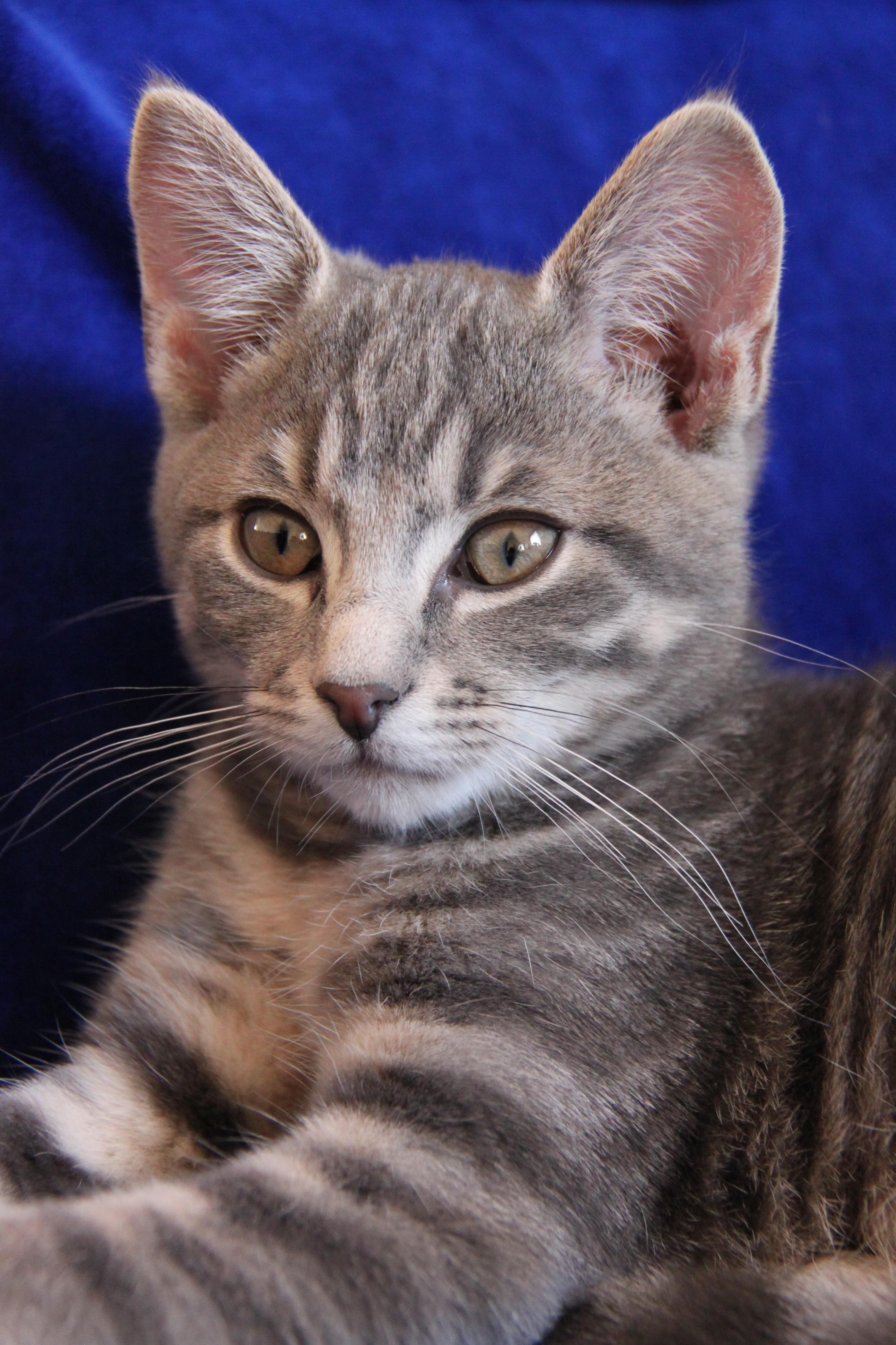 580 Koleksi Gambar Binatang Kucing Lucu HD Terbaru