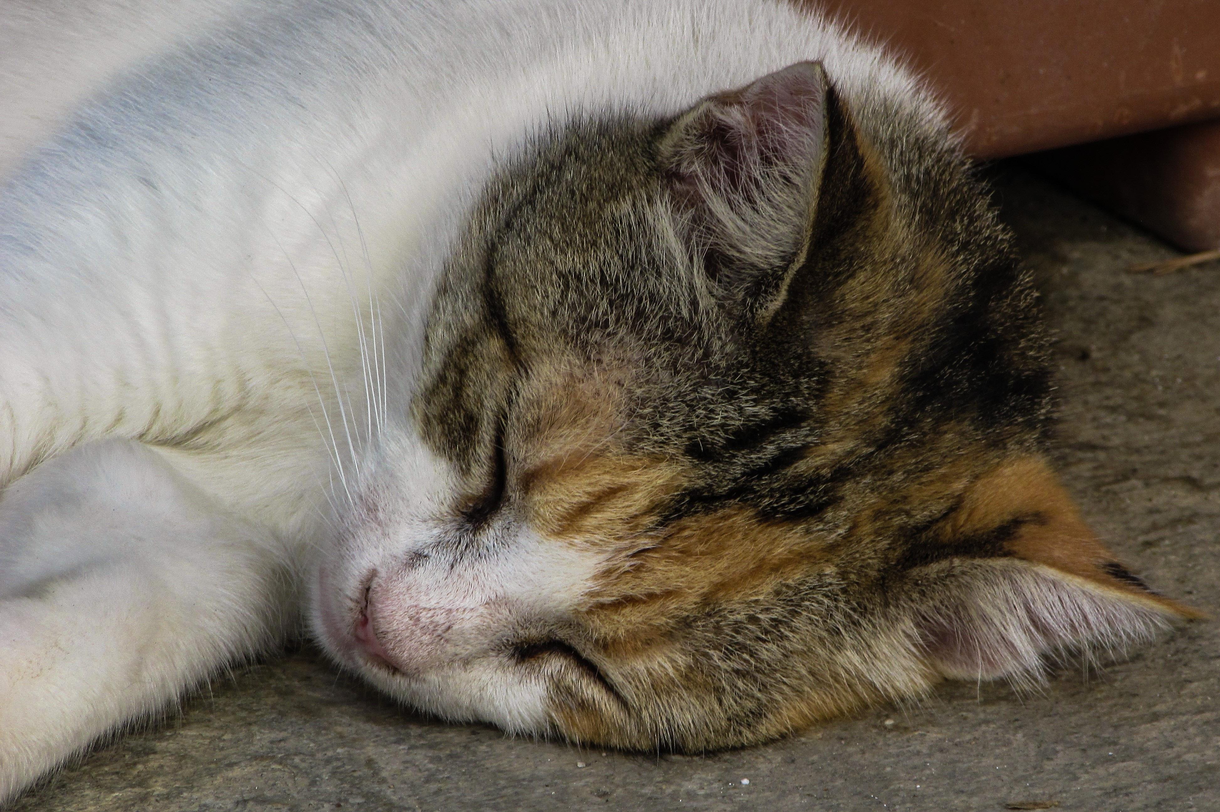 Koleksi Foto Lucu Kucing Tidur Kantor Meme