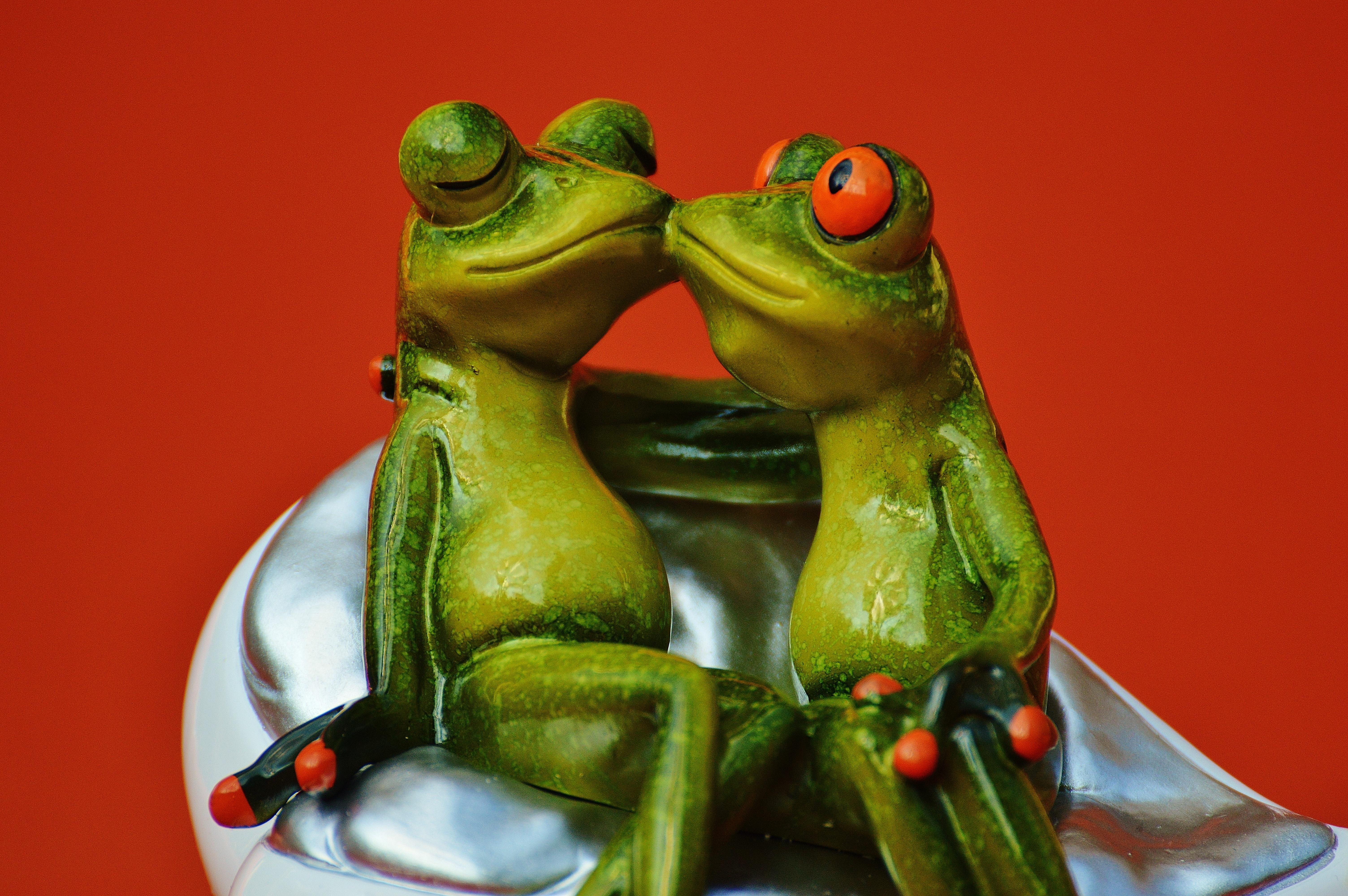 картинки поцеловала жабу поле, какими-то маленькими