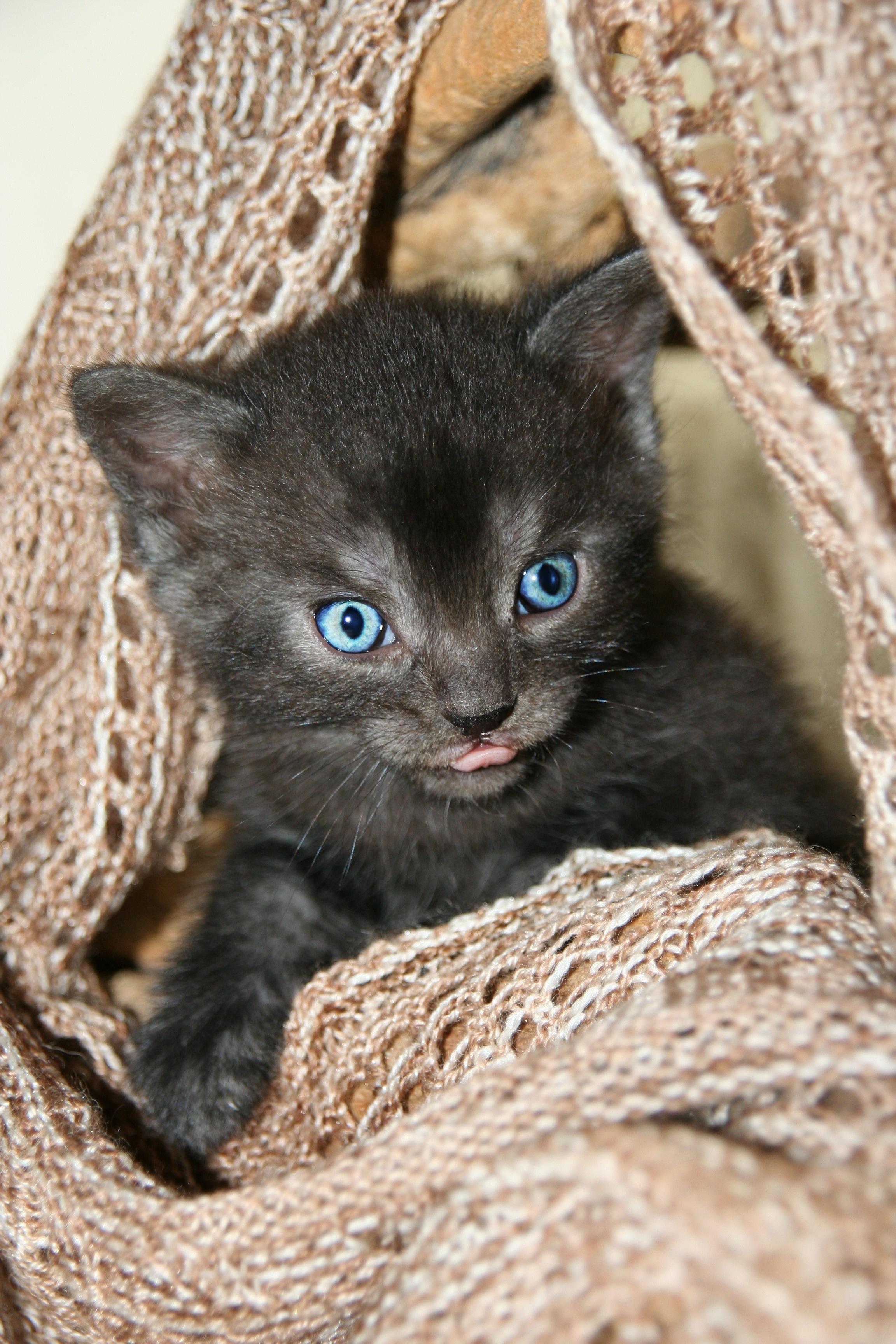 680 Koleksi Gambar Binatang Lidah Kucing Terbaik