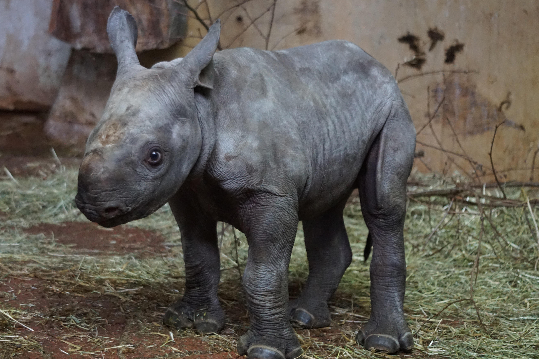 Gambar Imut Margasatwa Kebun Binatang Muda Binatang