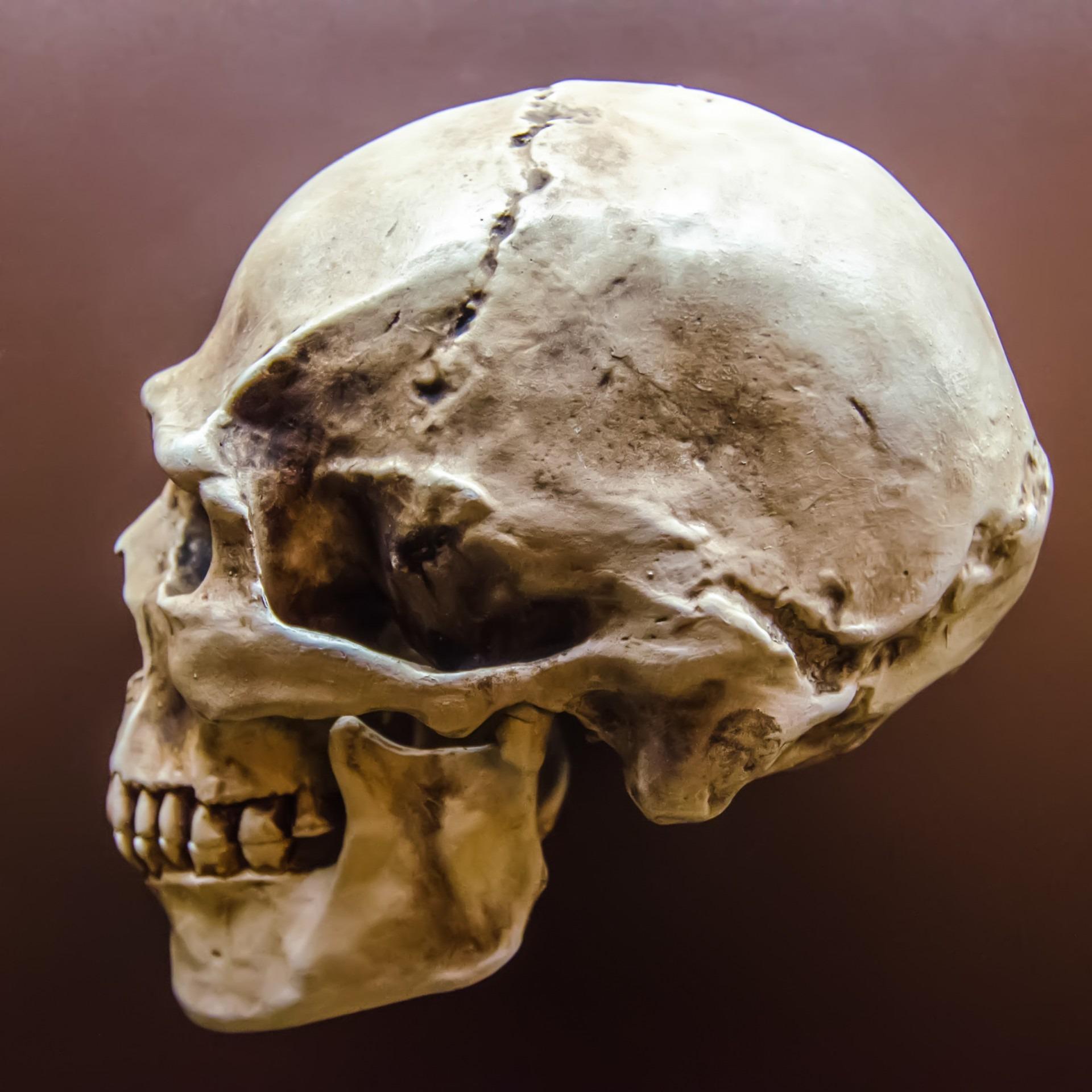 может оказаться картинки череп человек данной страничке