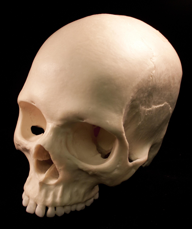 Fotos gratis : muerte, cráneo, hueso, boca, cara, escultura, nariz ...