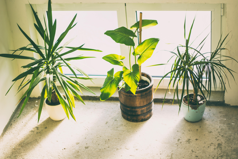Plante Haute En Pot images gratuites : décoration, flore, fraîcheur, plante