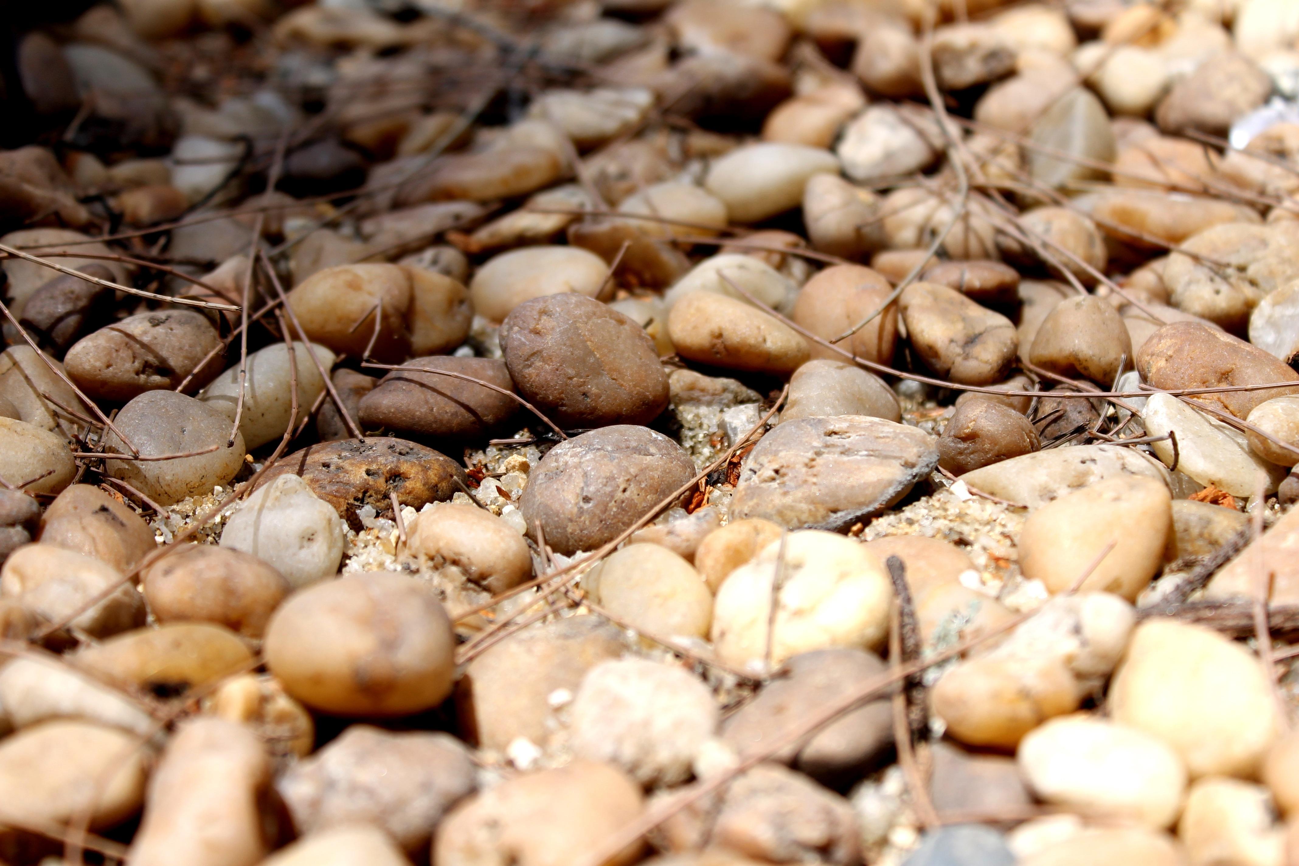 decoracin comida produce vegetal coco piedras planta floreciendo chalote camino de piedra rocas del ro familia