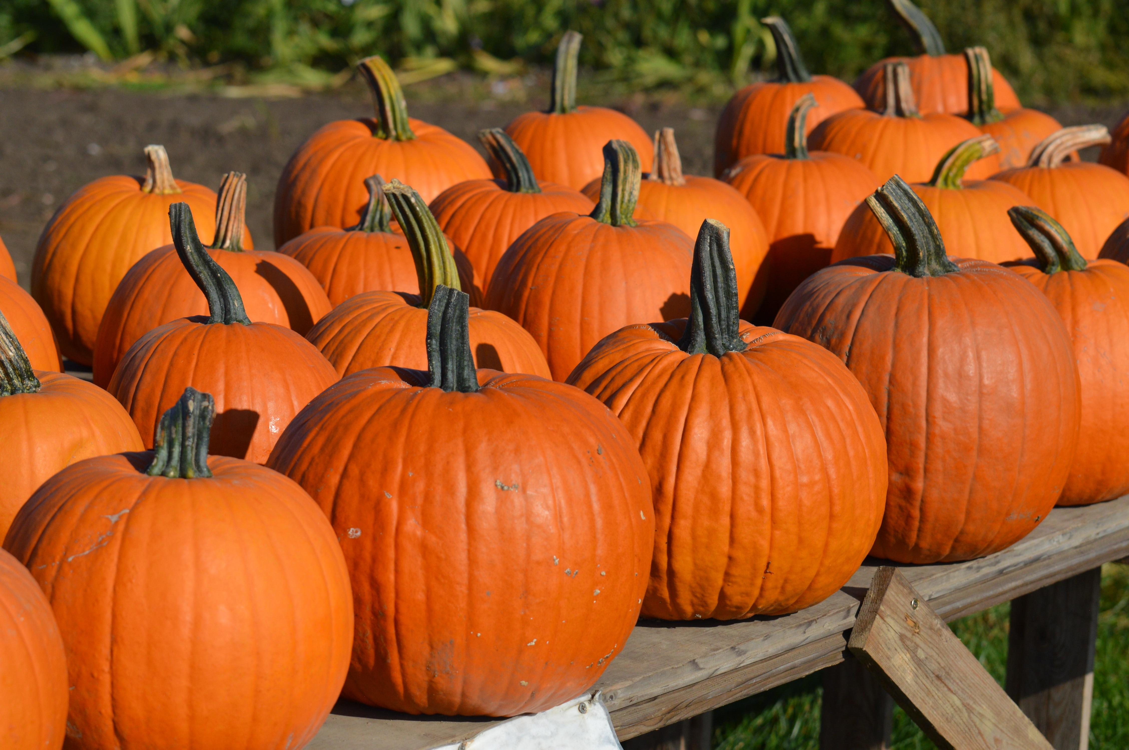 Gambar Jeruk Menghasilkan Musim Gugur Halloween Kundur