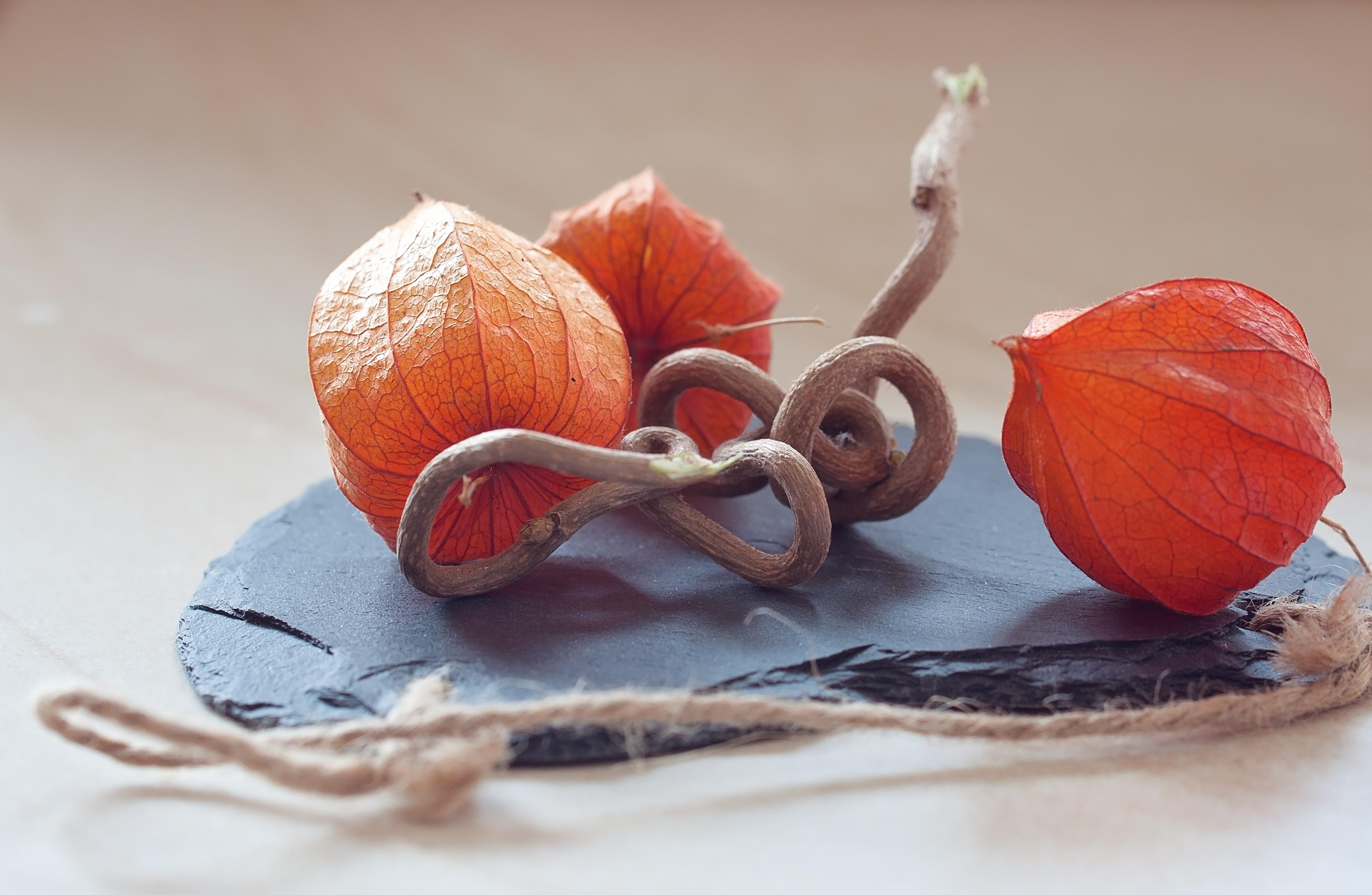 Fotos gratis : decoración, naranja, rojo, color, cerca, material ...