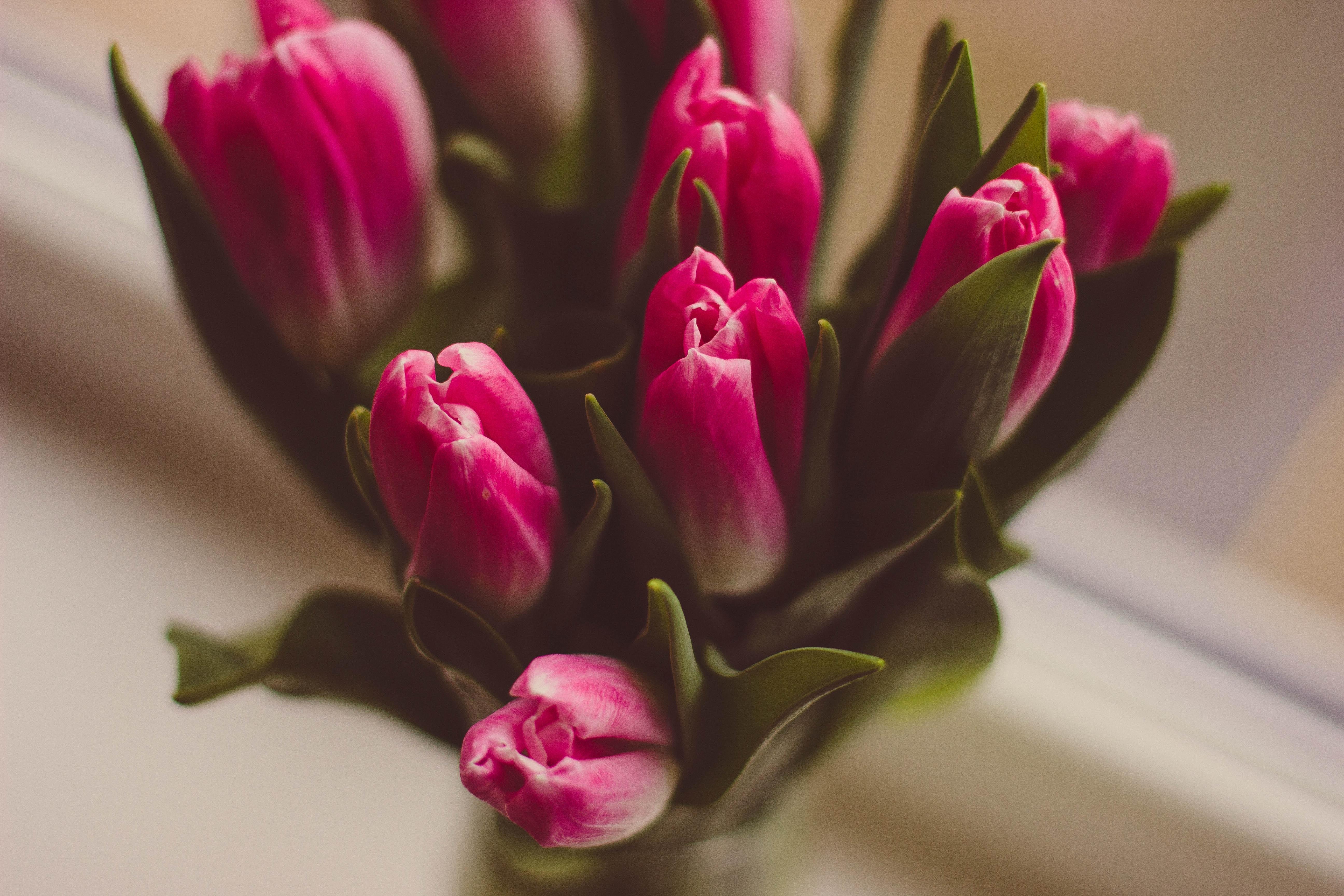 Unduh 5600 Gambar Bunga Tulip Dalam Vas Terbaik
