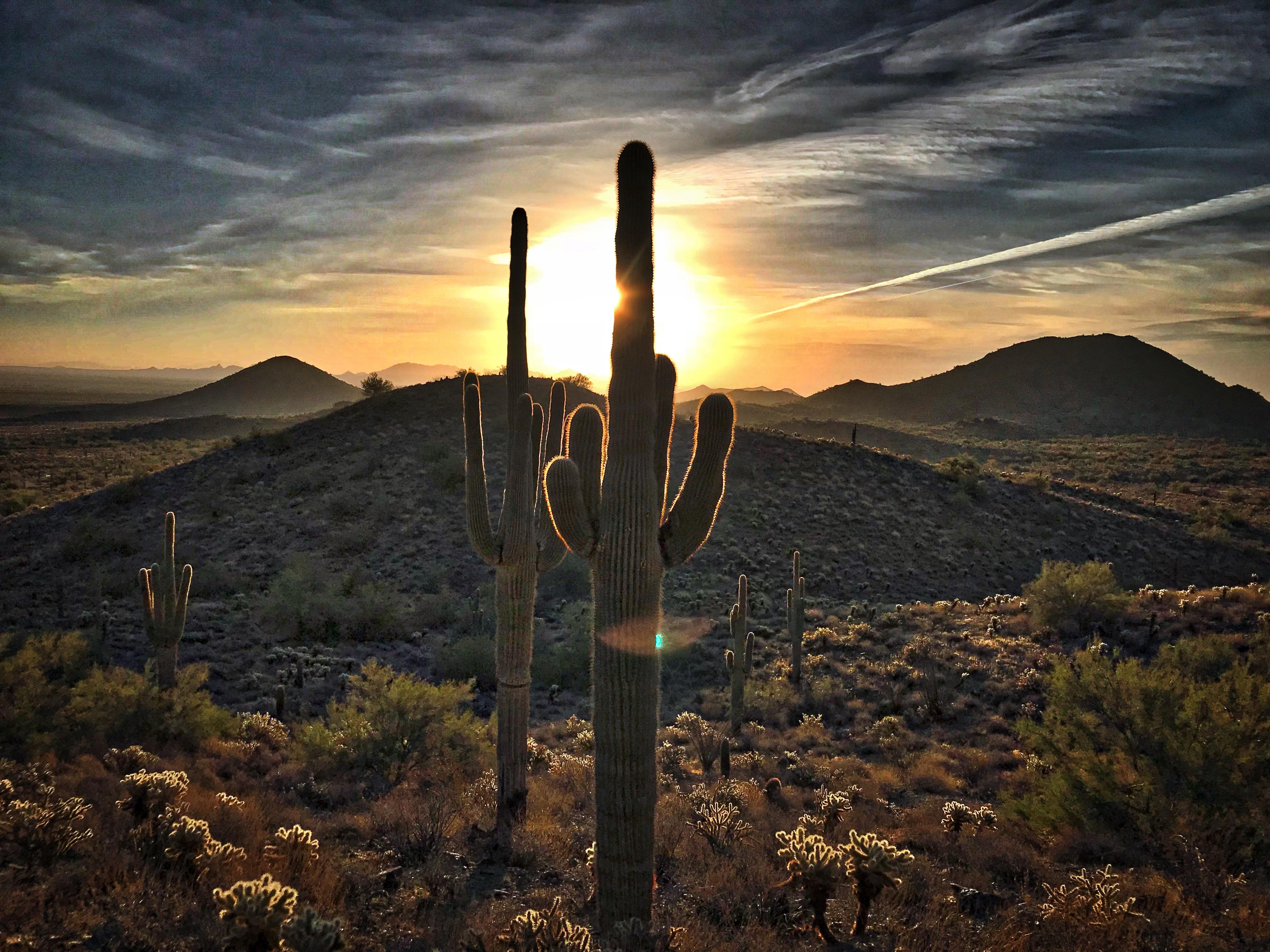 Desert Cactus Sunrise Sky Landscape Cloud Dawn Evening Sunset Tree Mountain Meteorological Phenomenon Ecoregion Horizon Hill