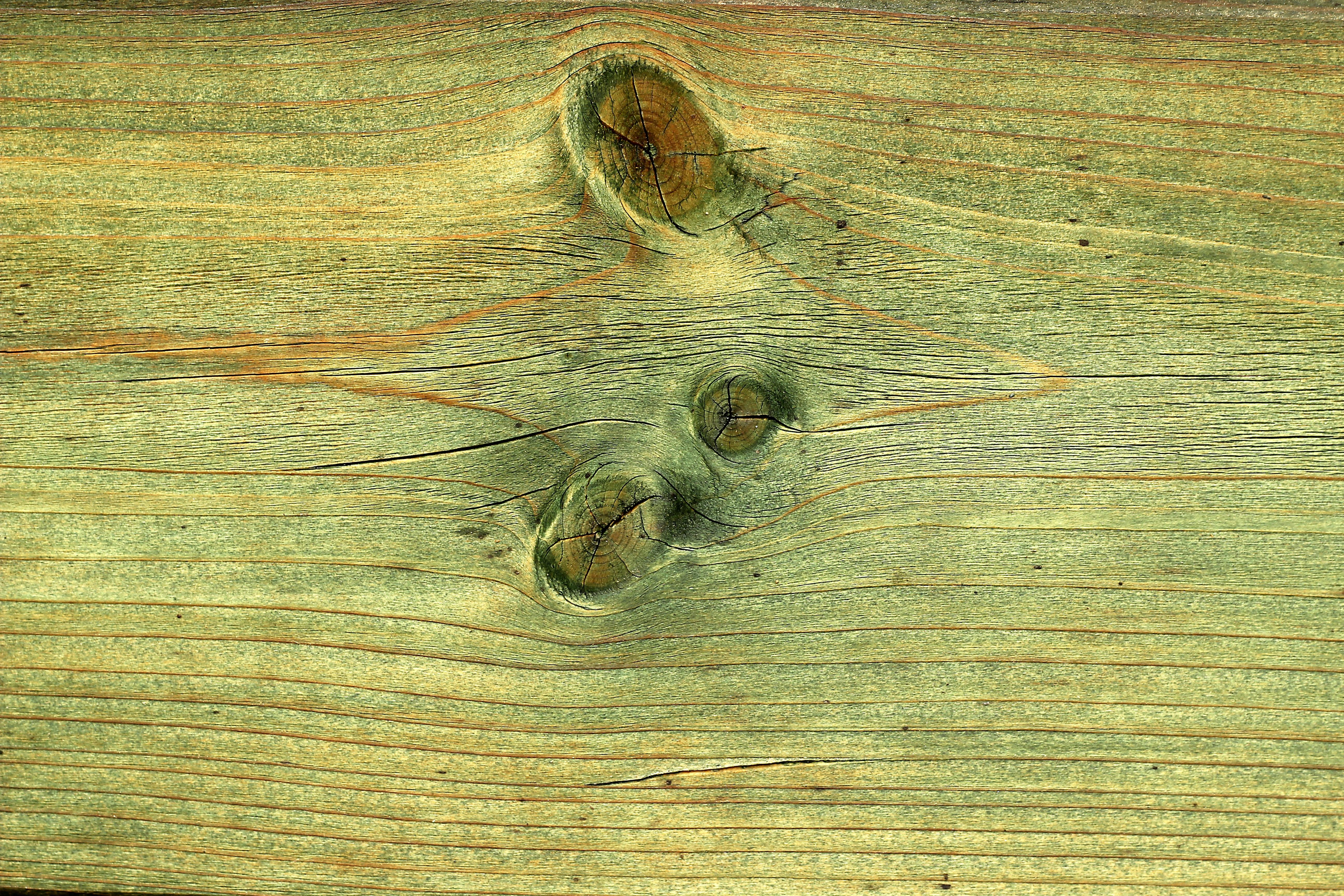 Fotos Gratis Escritorio Mesa Naturaleza Abstracto Tablero  ~ Como Son Las Polillas De La Madera