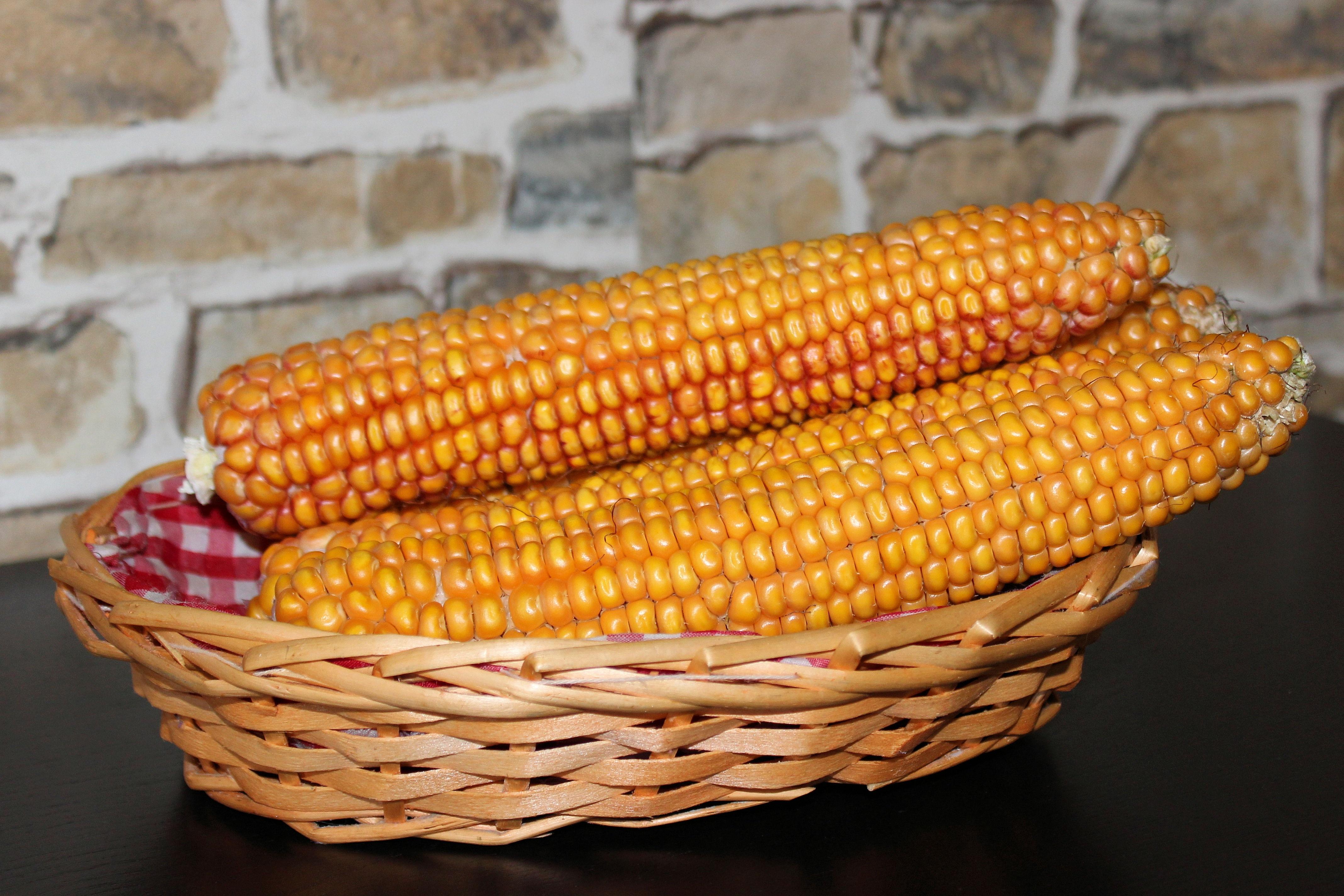 Kostenlose foto Gericht Lebensmittel produzieren Mais
