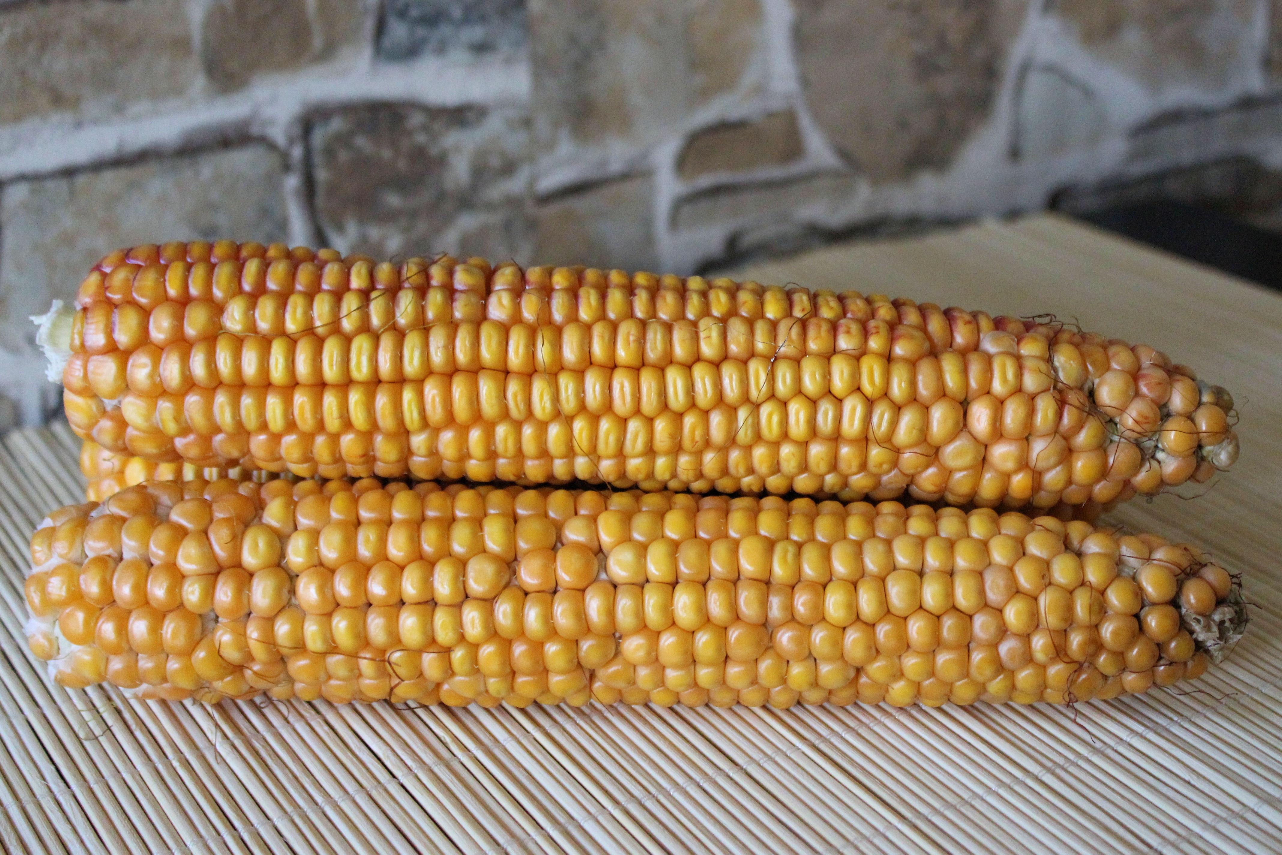 Free Images : produce, cuisine, vegetables, sweet corn