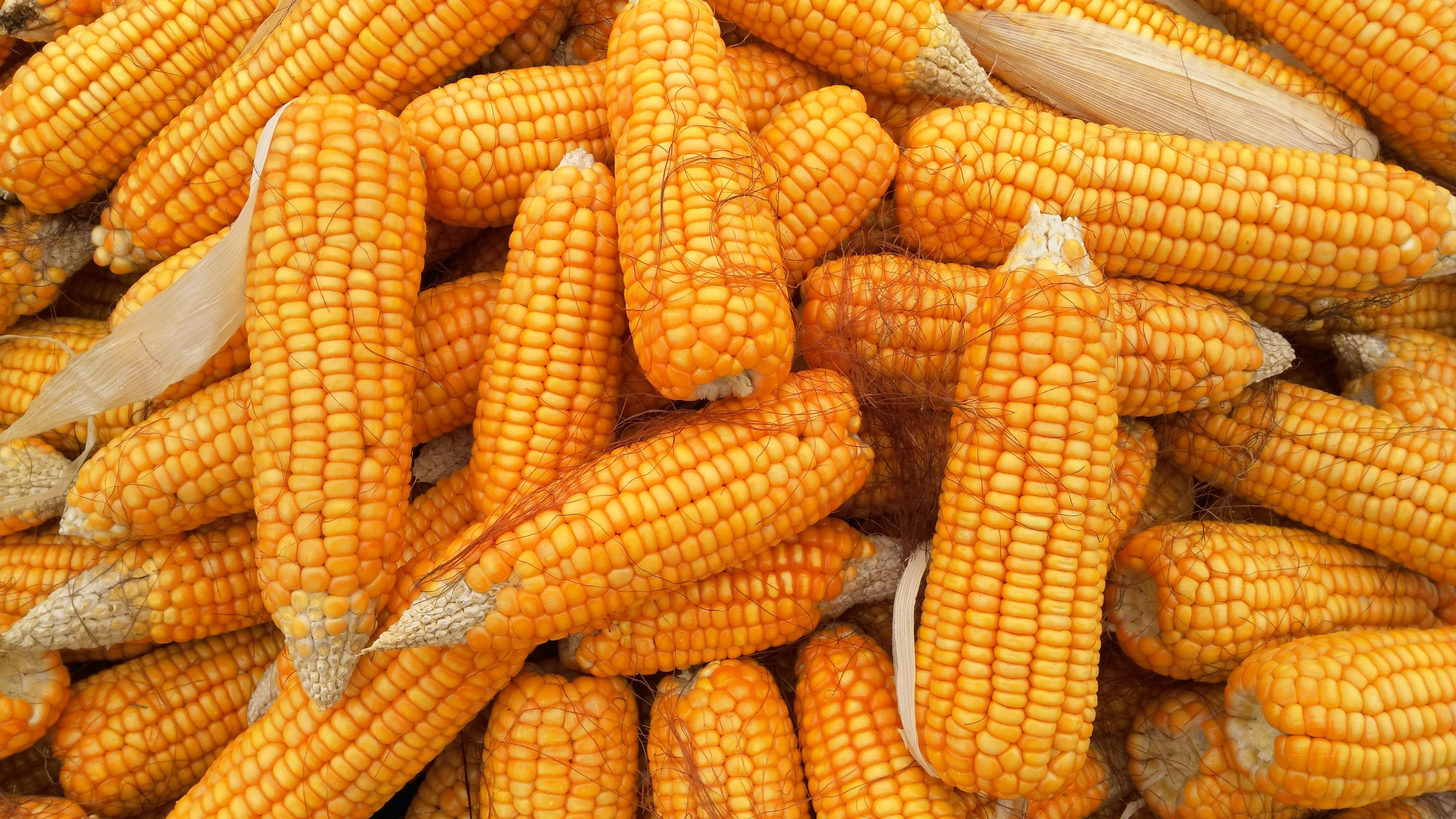er majs sunde
