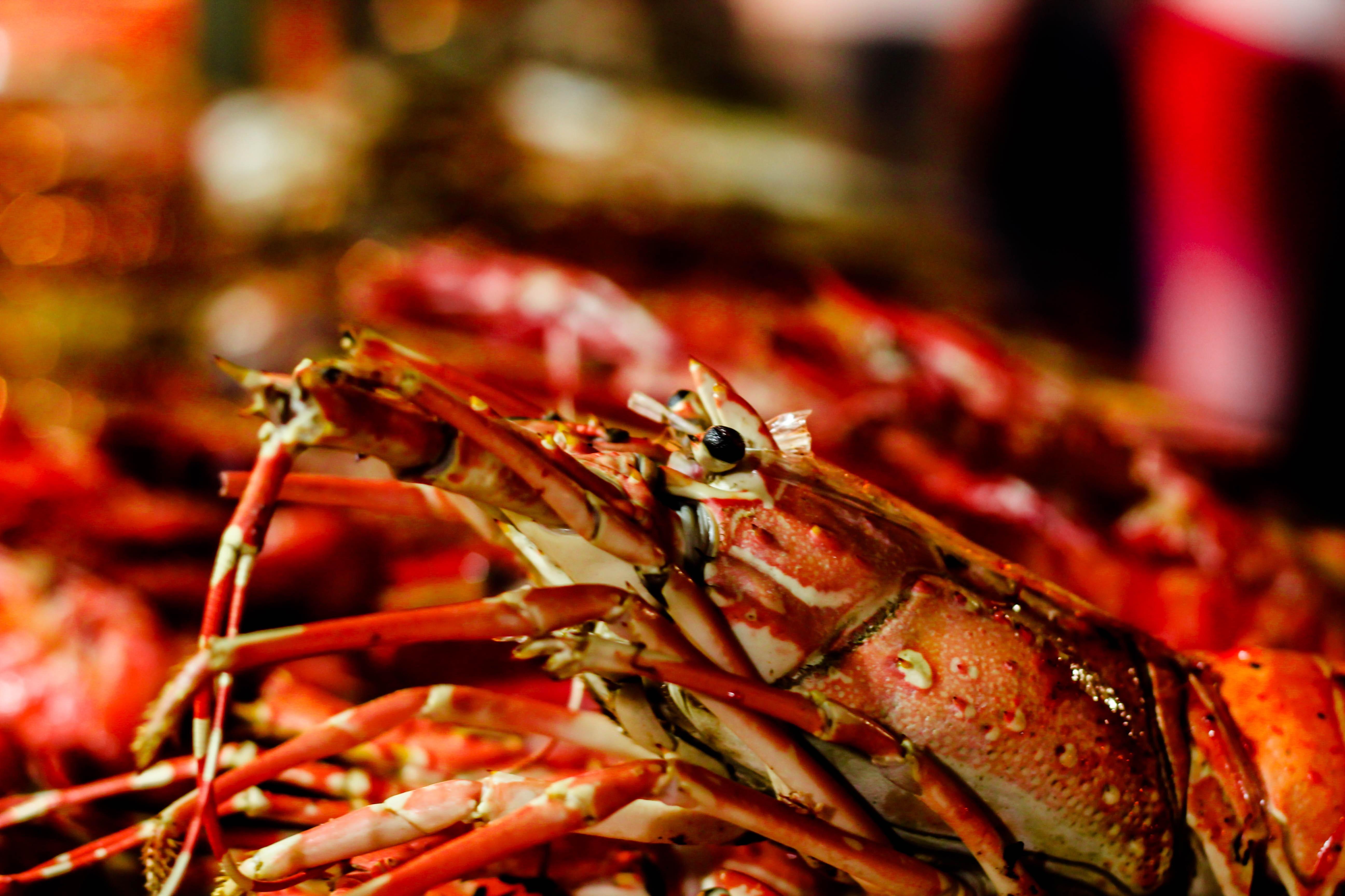Gambar Hidangan Makan Makanan Laut Masakan Invertebrata