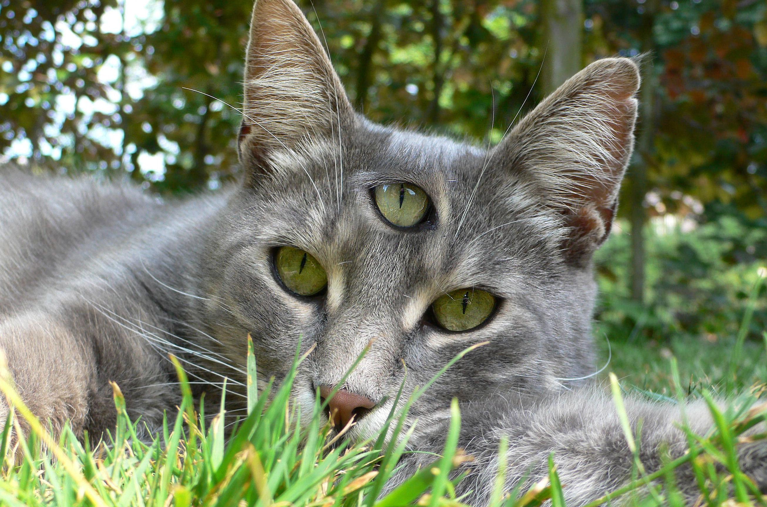 Veľký tuk mačička
