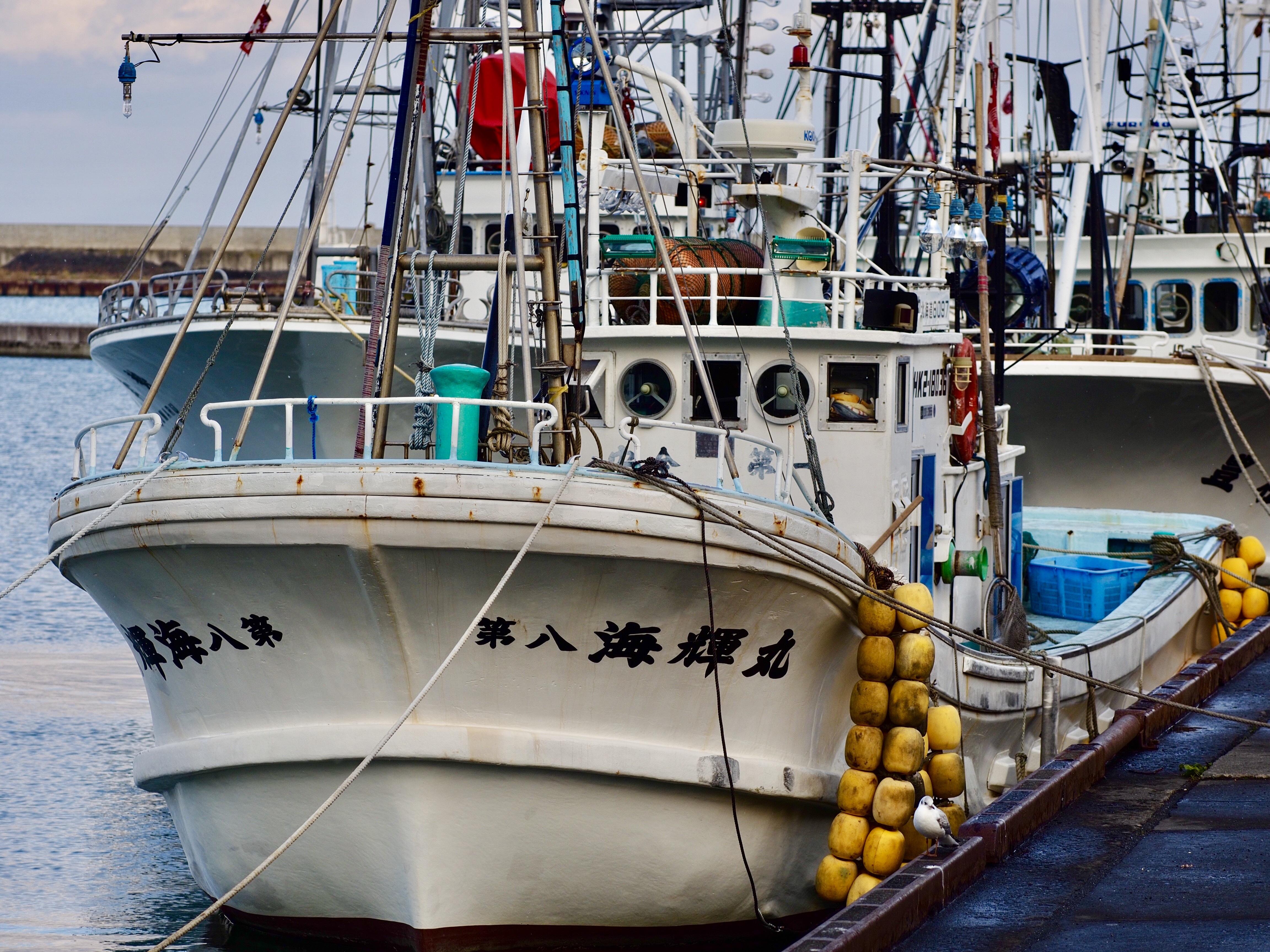 как научиться смотреть картинки рыболовецких судов ней подружусь