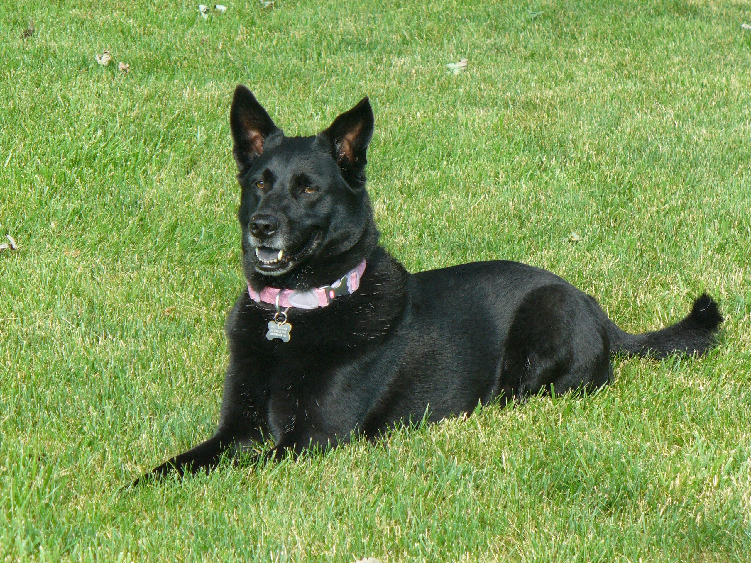 Black Dog Grande Prairie