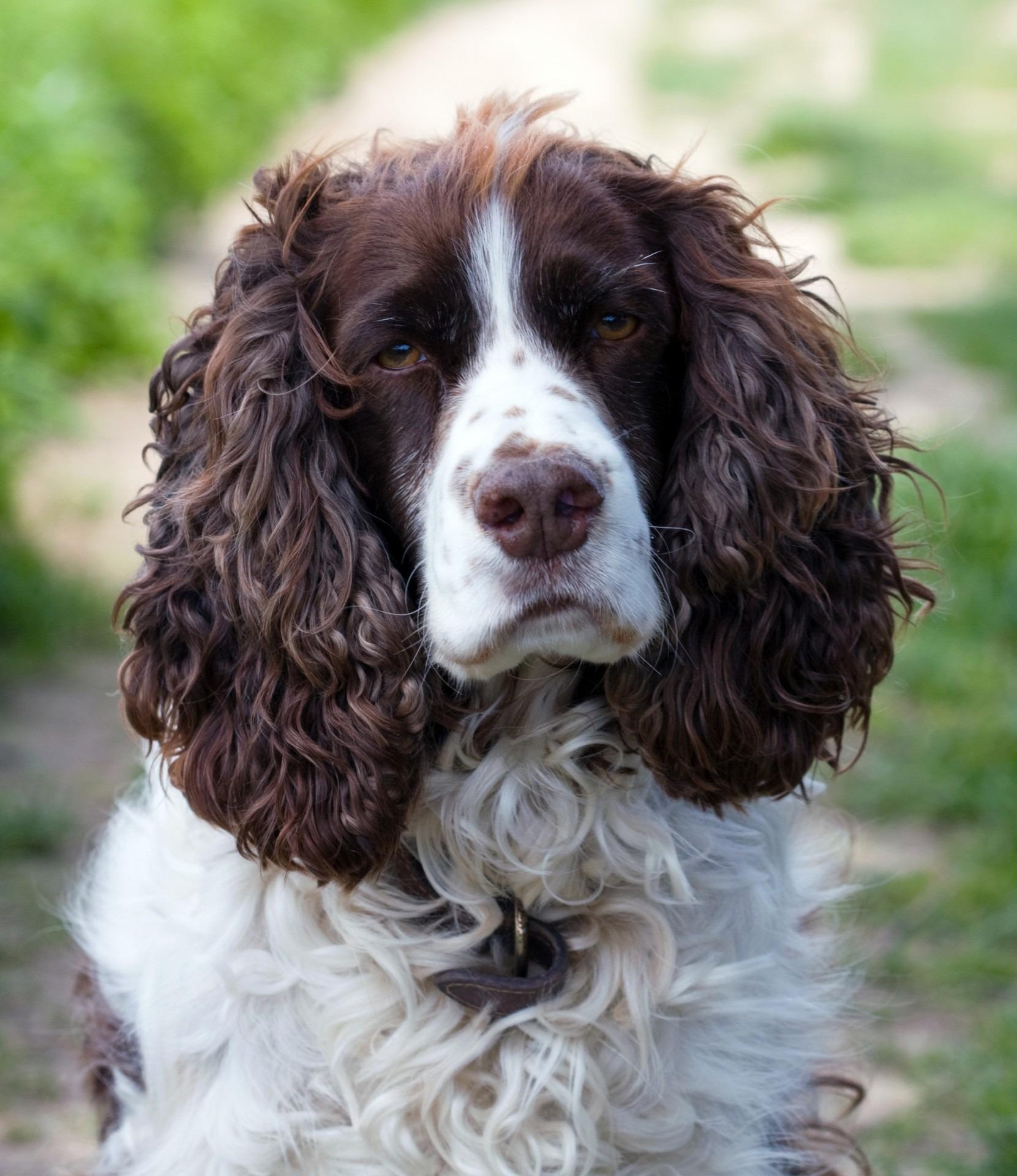 Free Images Animal Canine Photo Pet Portrait Close Up Face