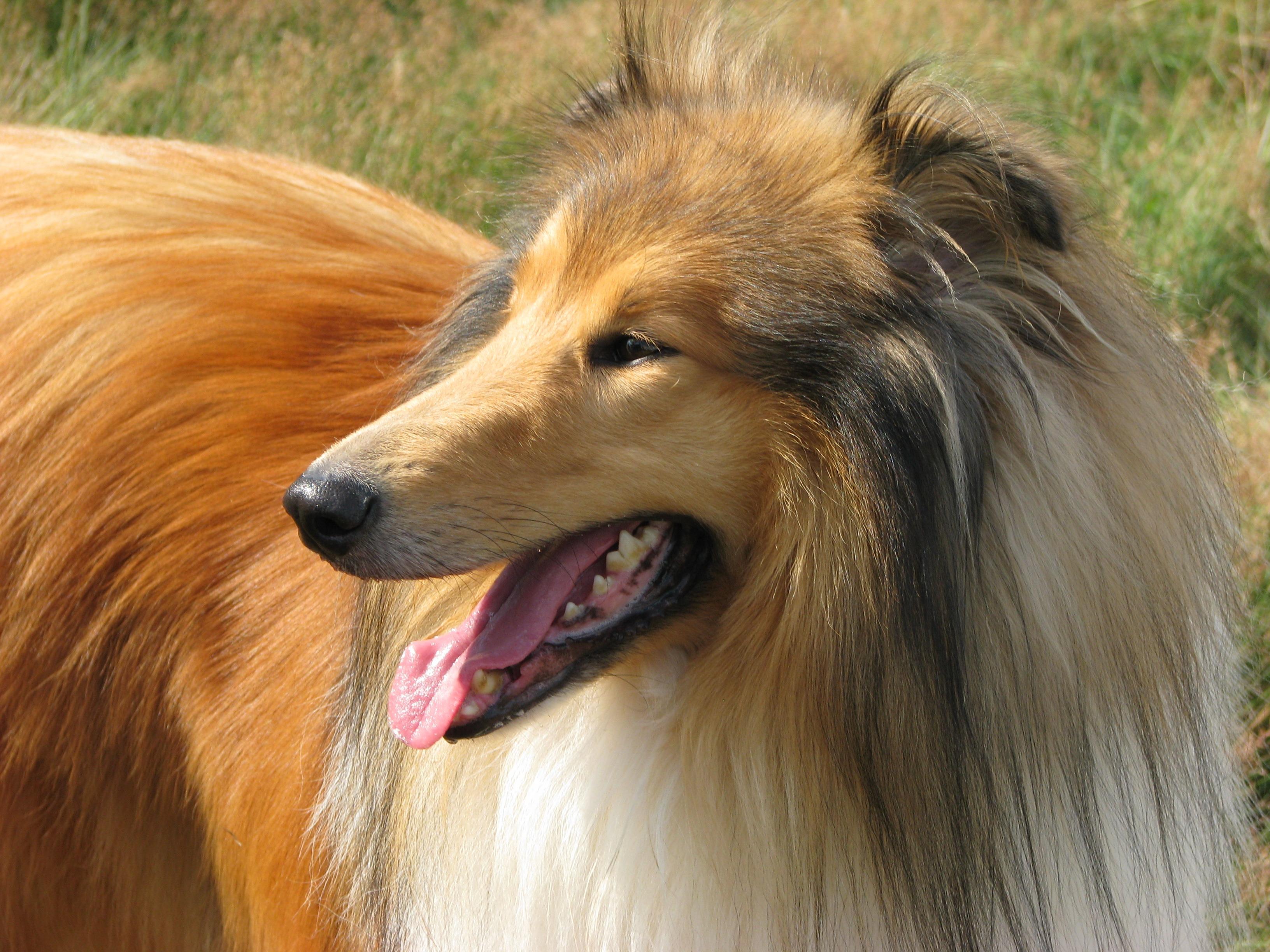 Banco De Imagens Cachorro Animal Canino Perfil Foto