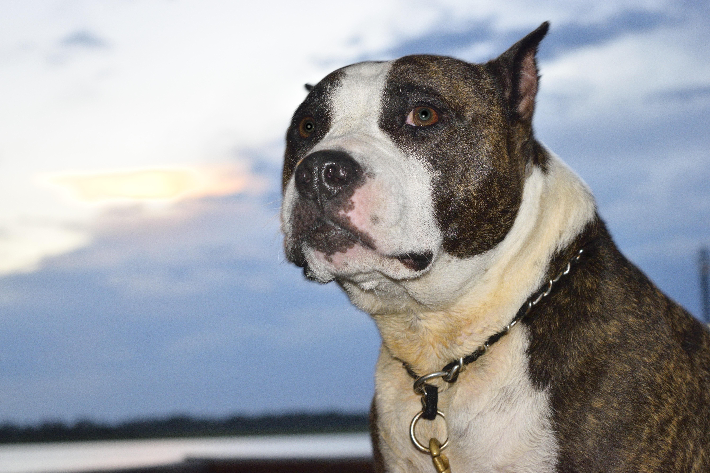 Banco De Imagens Cachorro Animal Fofa Canino Olhando Retrato