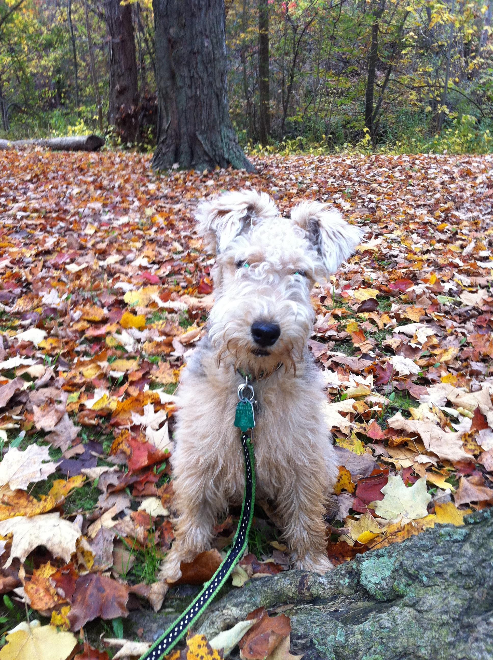 Kostenlose foto : Herbst, Jahreszeit, Wirbeltier, Hund wie Säugetier ...