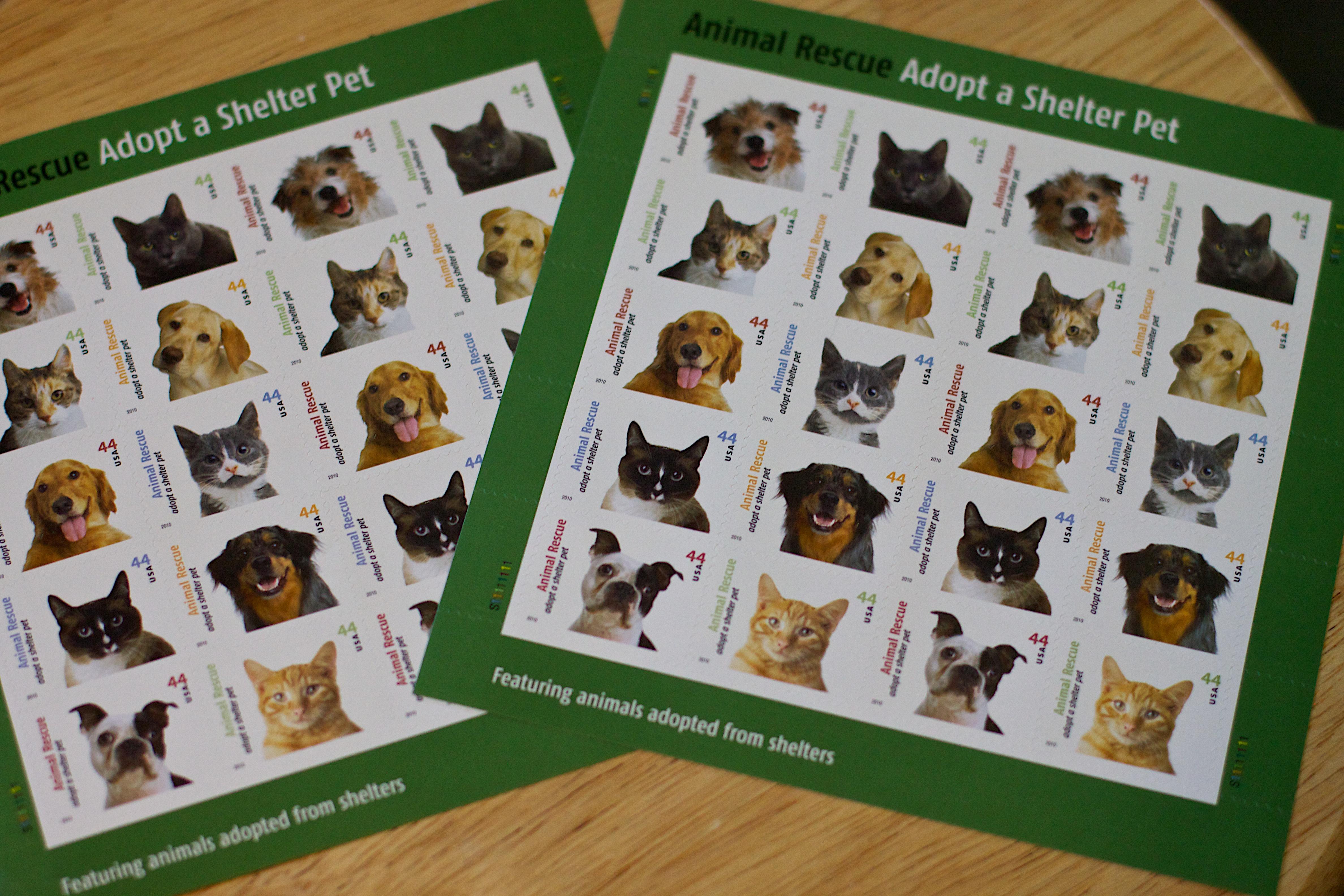 juegos gratis de perros y gatos