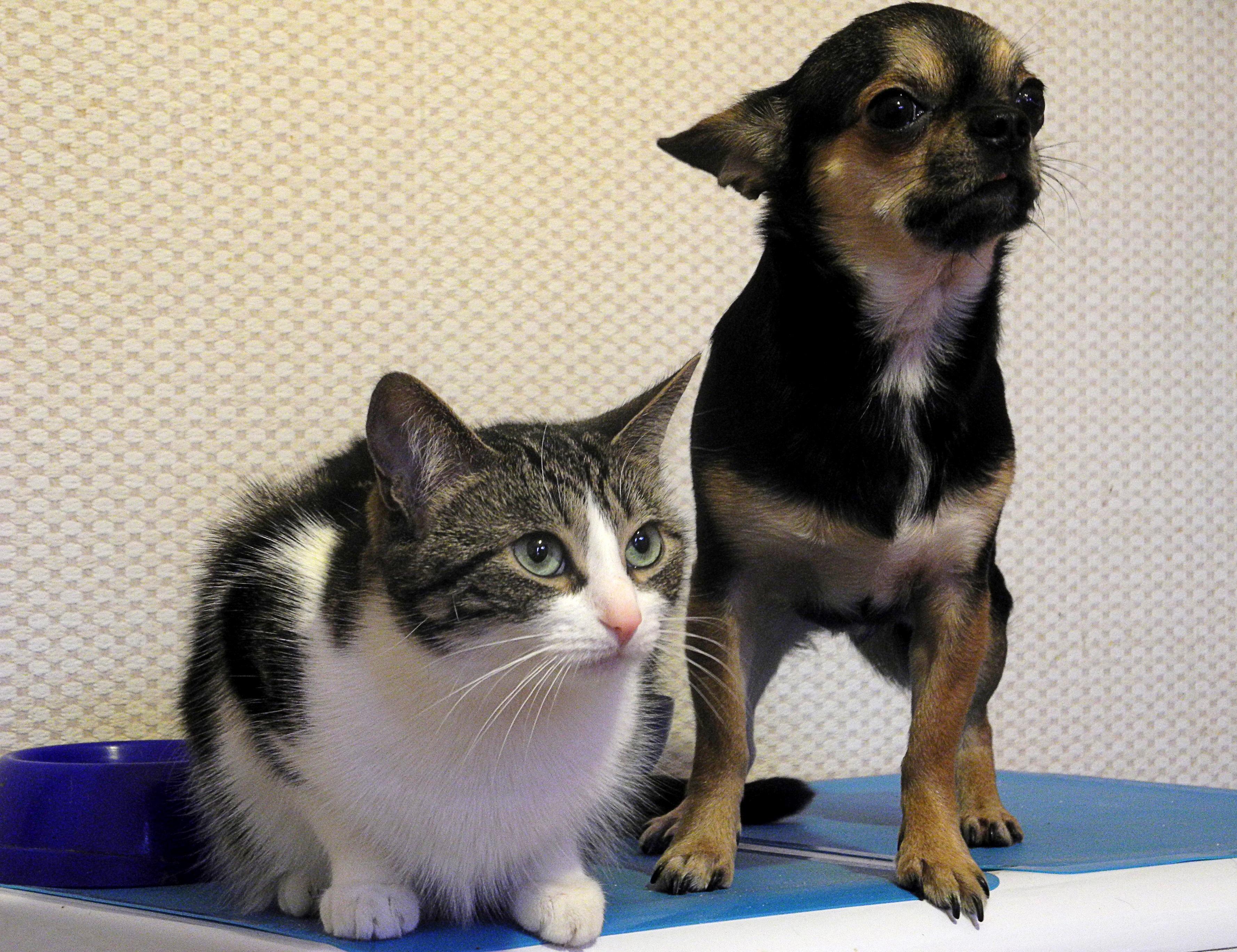 вдалеке коты с характером собаки порода якутии ресторанному