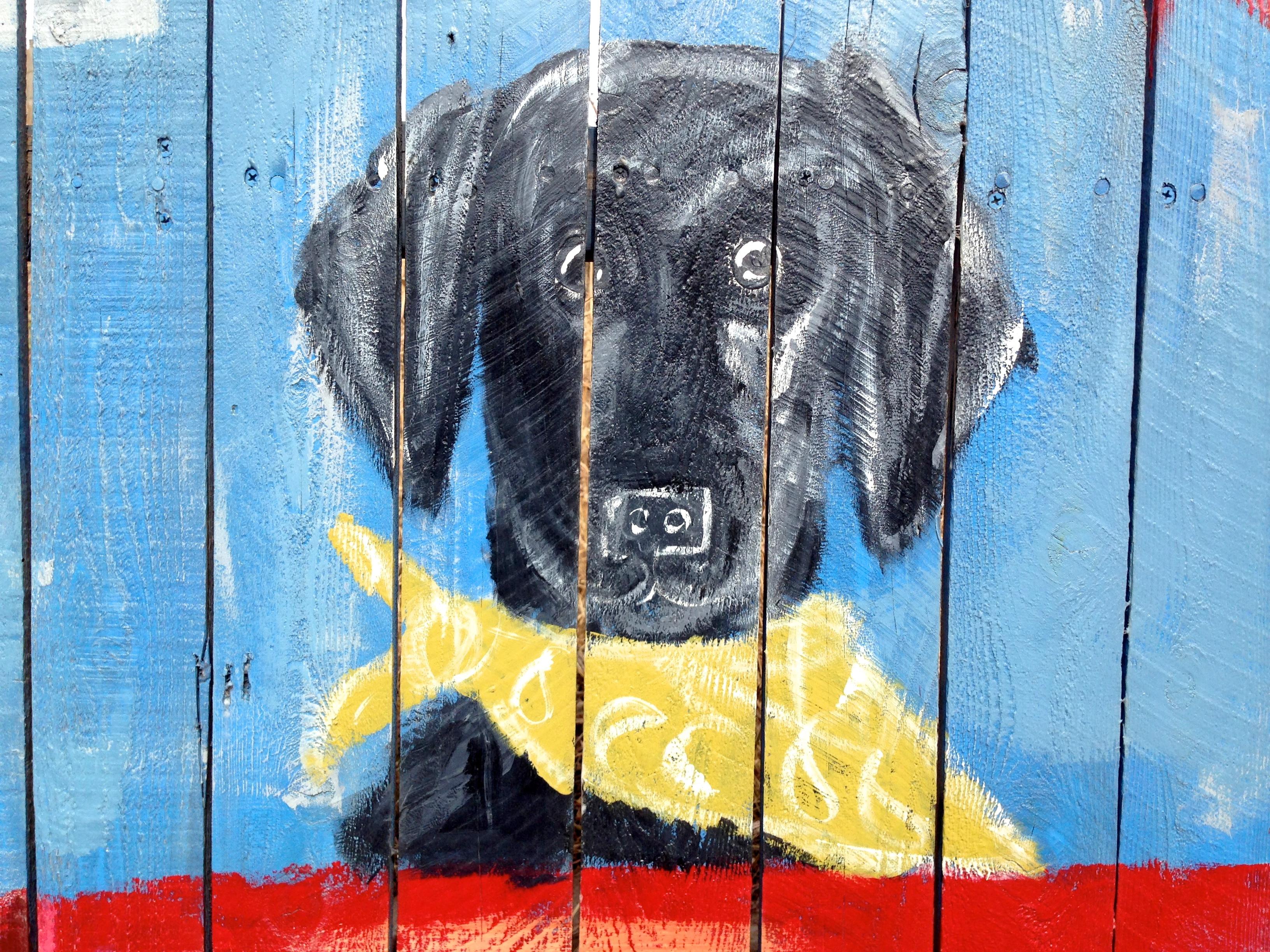 Fotoğraf Renk Mavi Duvar Yazısı Boyama Sokak Sanatı Güzel
