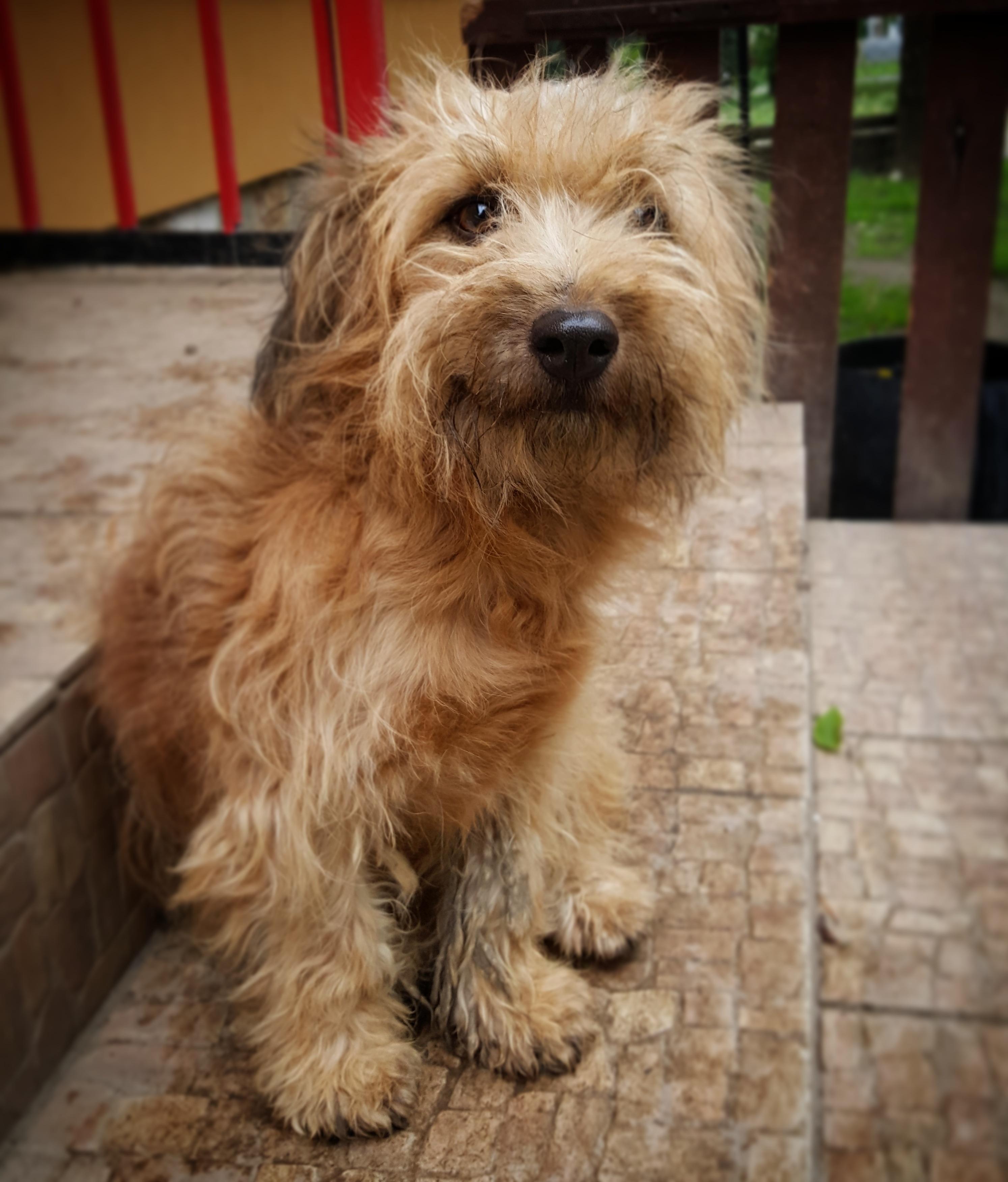 Canine Portrait Fauna