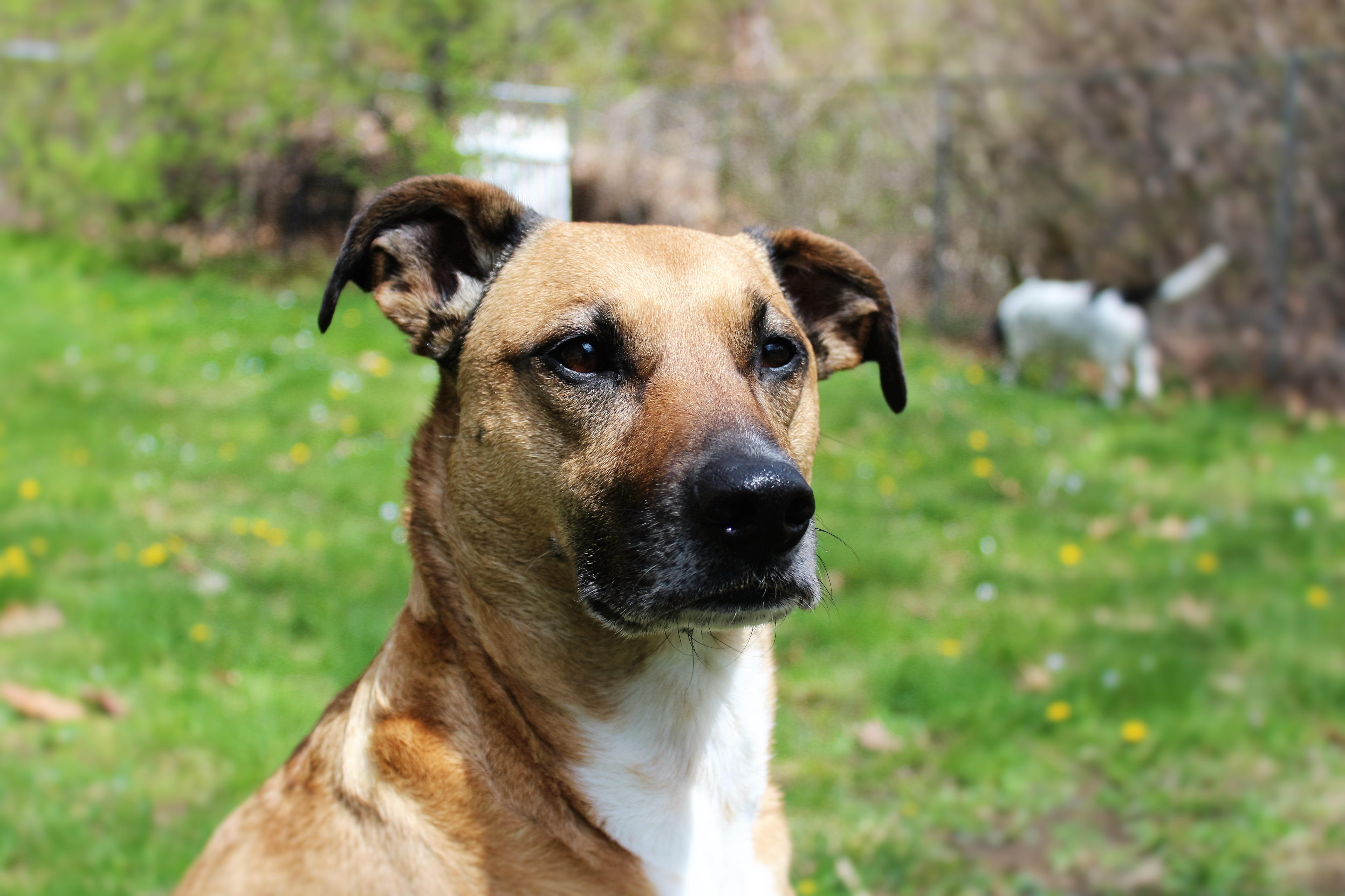 dog with rabies - HD3840×2560