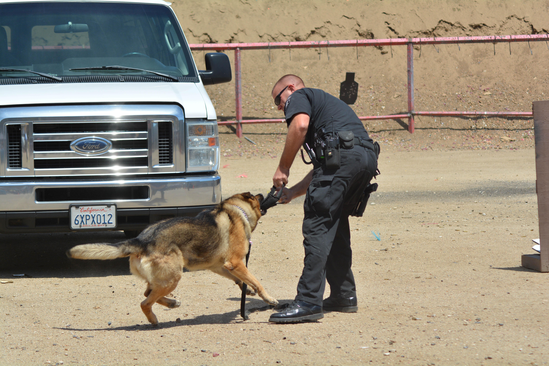 20++ Gambar anjing polisi terbaru
